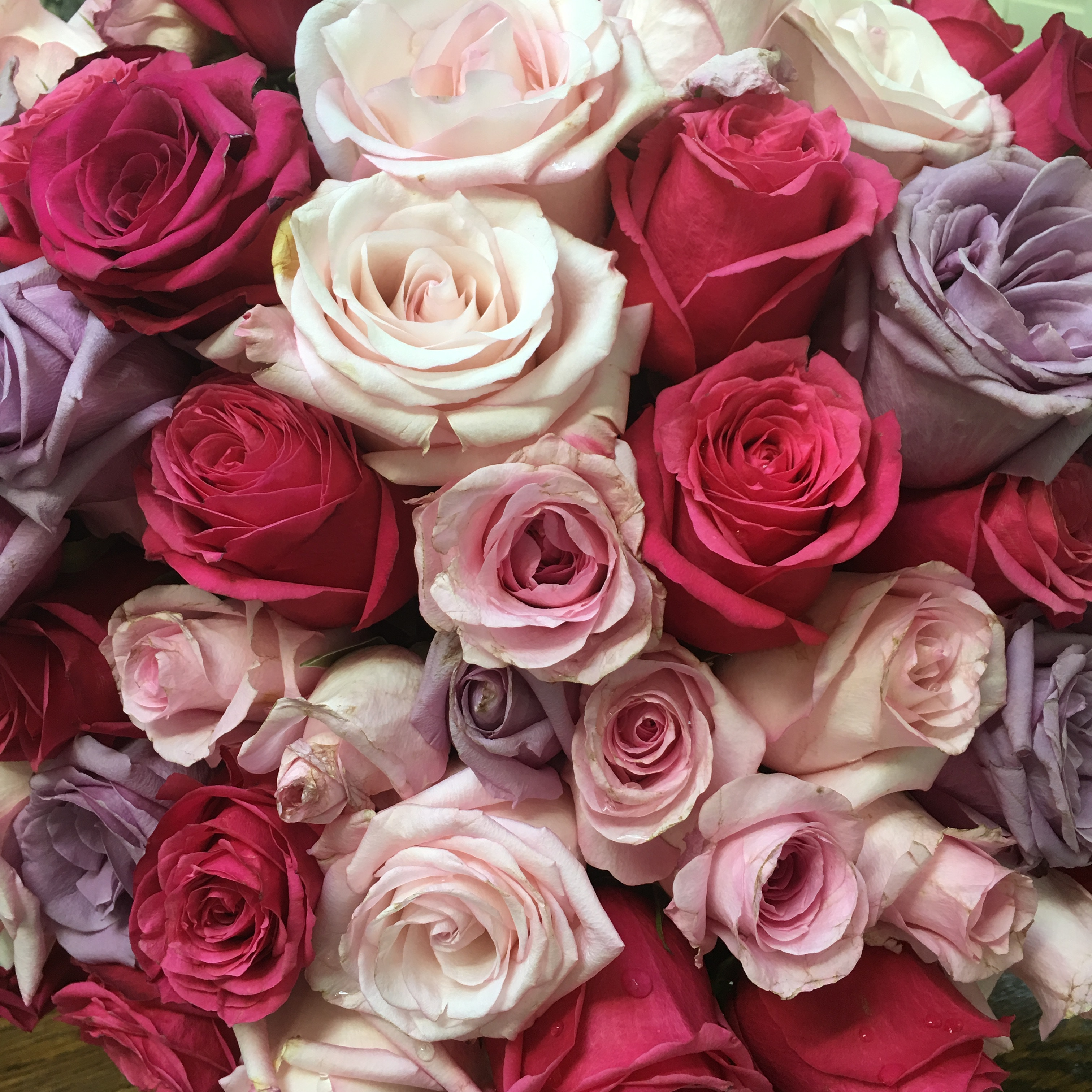 59144 download wallpaper Flowers, Roses, Multicolored, Motley, Bouquet screensavers and pictures for free