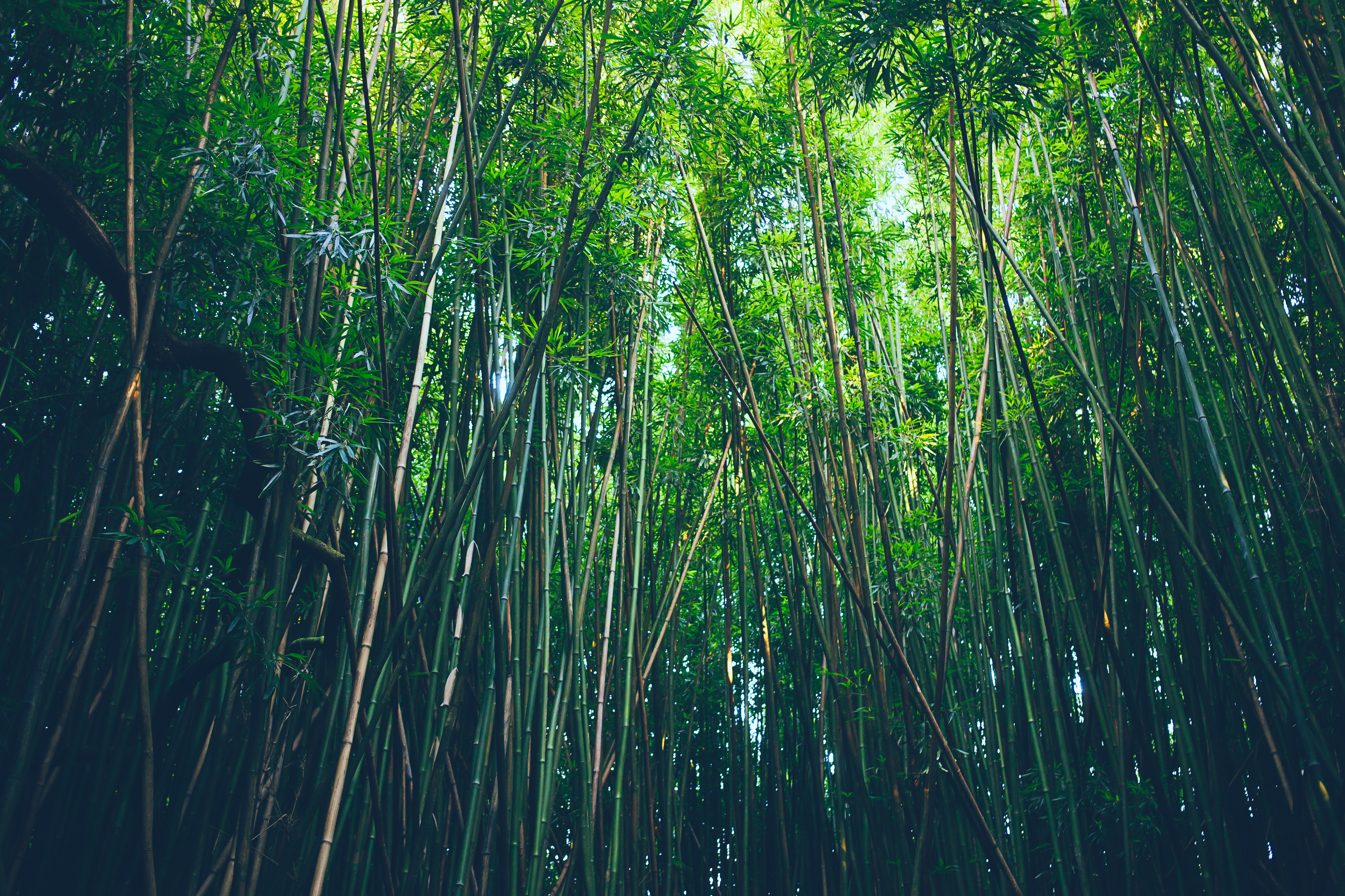 131279 download wallpaper Nature, Bamboo, Trees, Thickets, Thicket screensavers and pictures for free