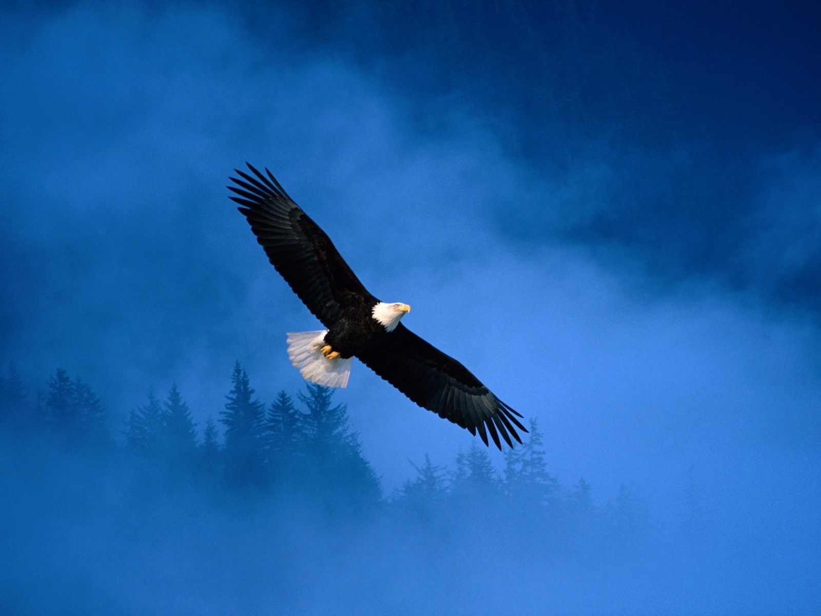 4458 download wallpaper Animals, Birds, Eagles screensavers and pictures for free