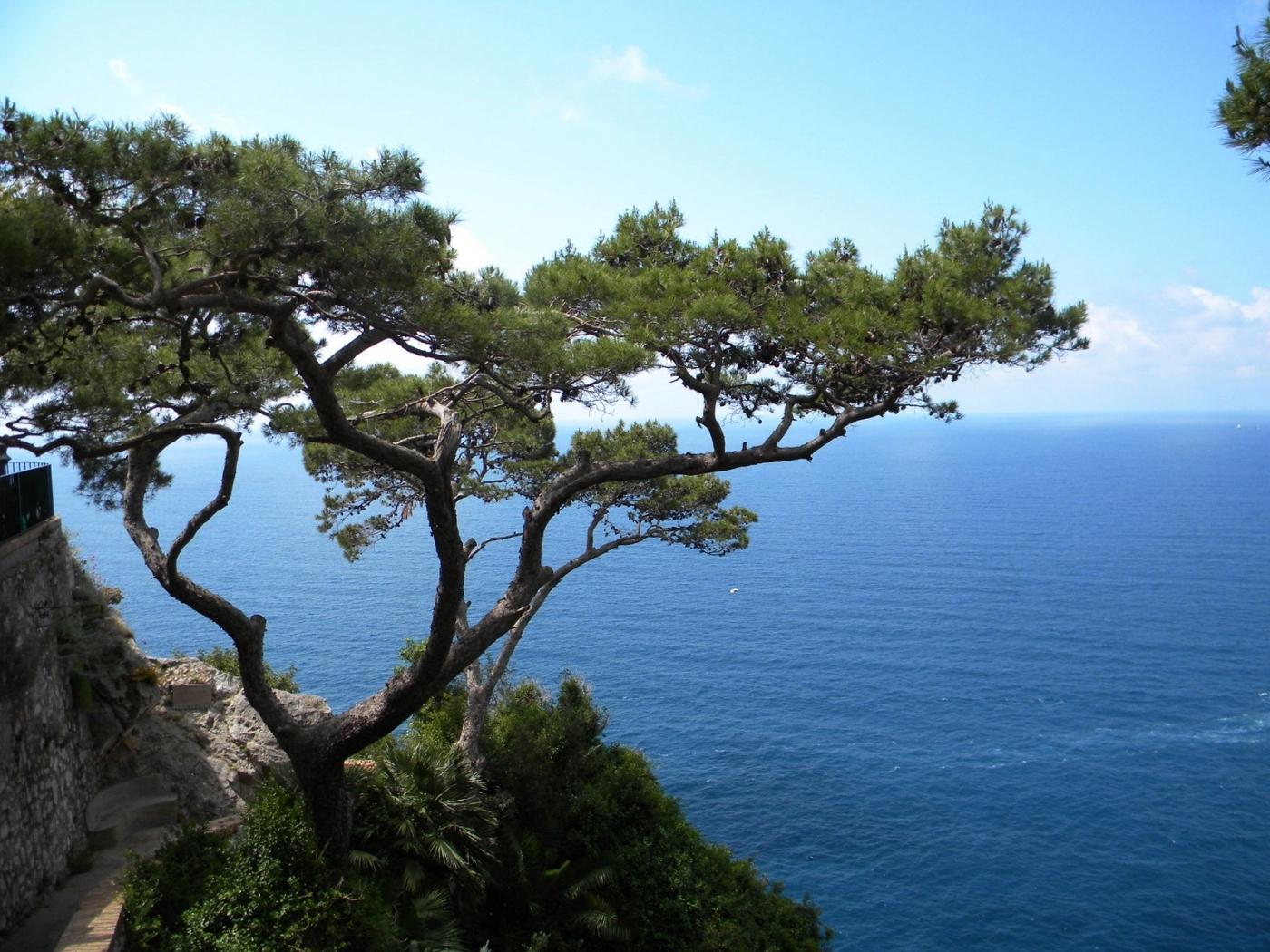 32675 скачать обои Пейзаж, Деревья, Море - заставки и картинки бесплатно