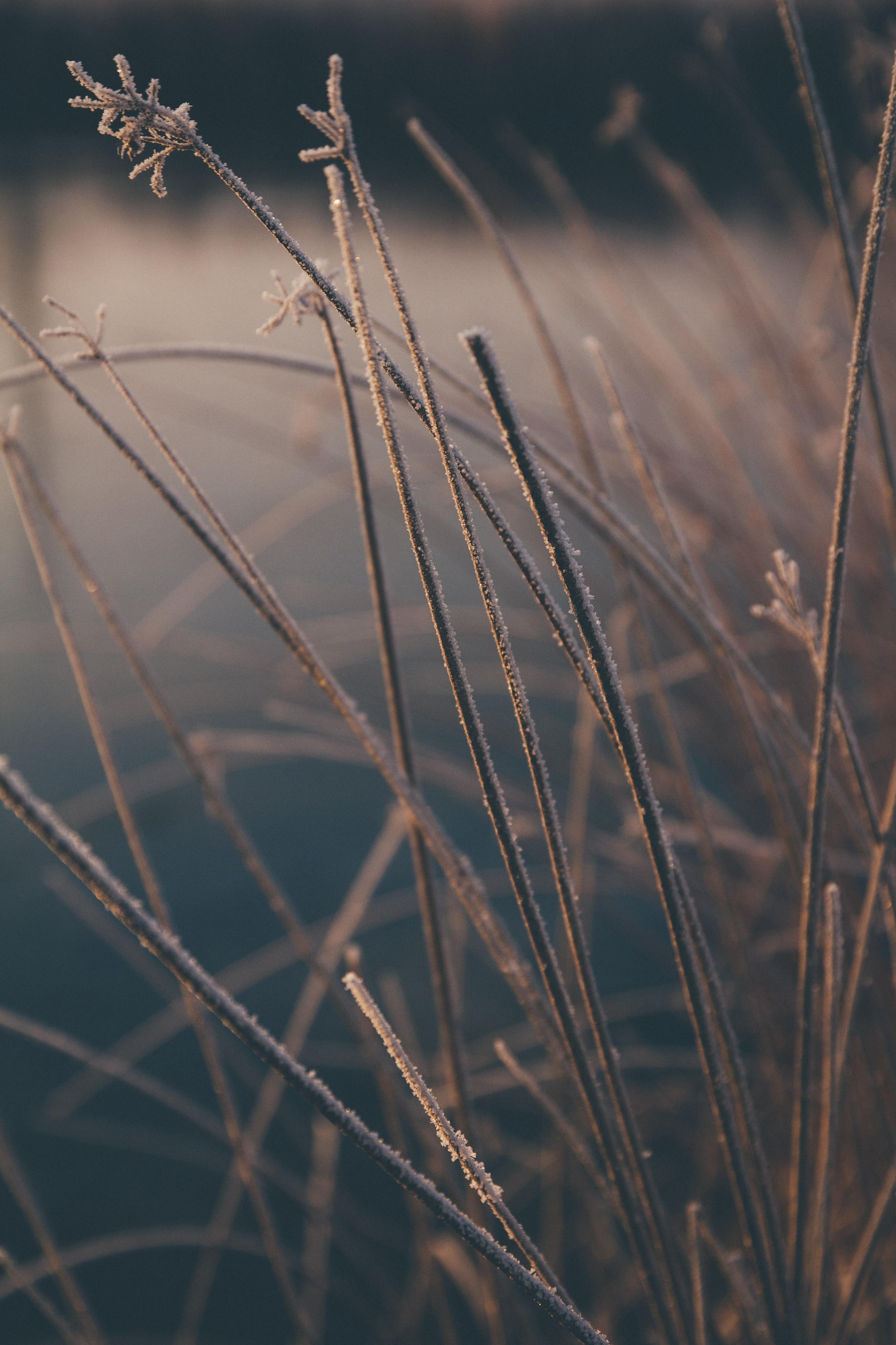 89460 скачать обои Макро, Трава, Растения, Иней, Зима - заставки и картинки бесплатно