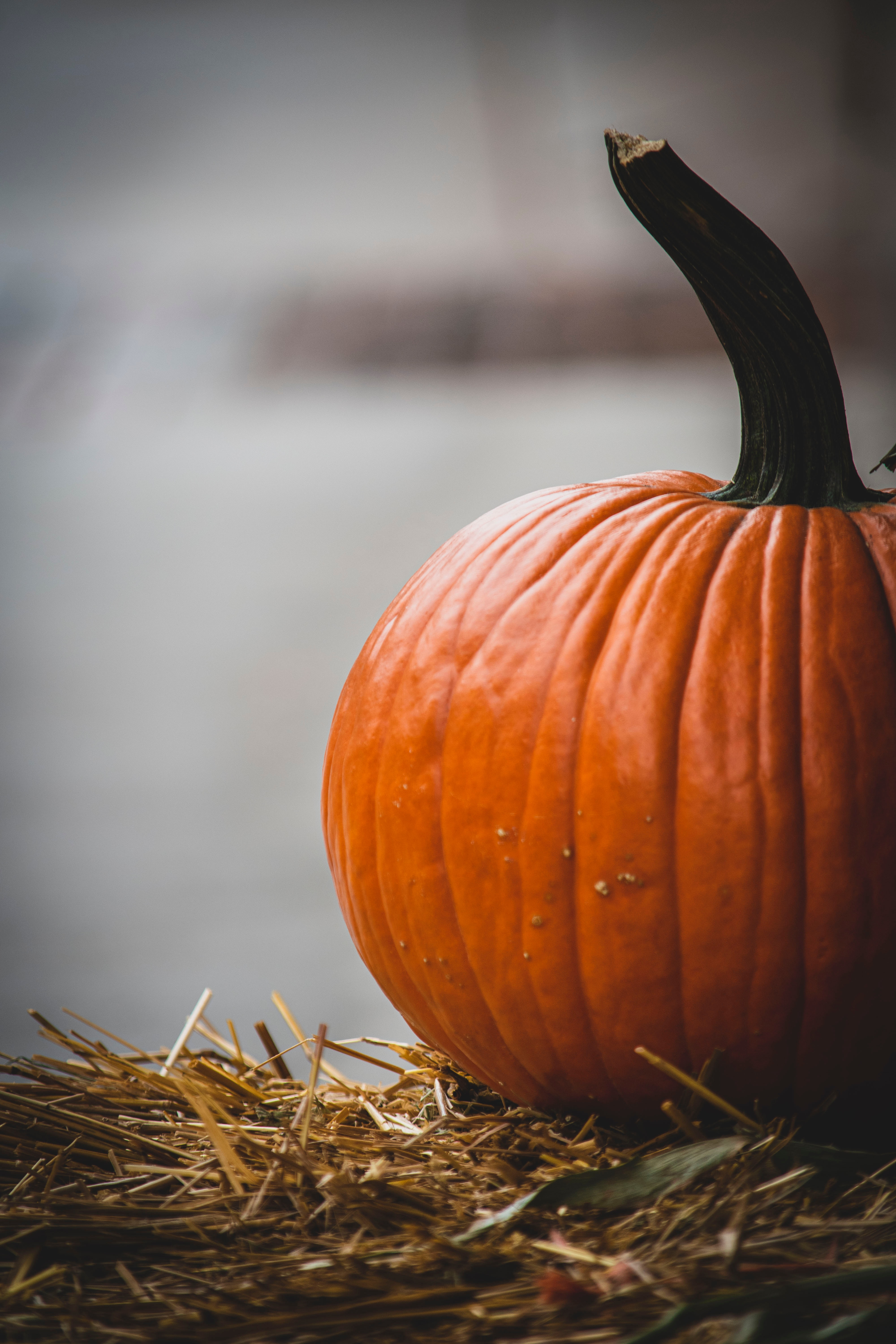 83833 Screensavers and Wallpapers Pumpkin for phone. Download Food, Pumpkin, Ripe, Harvest, Vegetable pictures for free