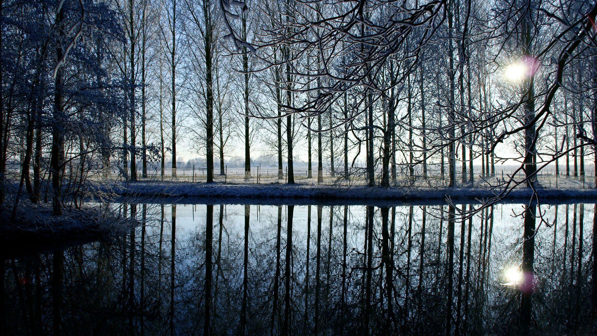 152060壁紙のダウンロード自然, 木, 森林, 森, 反射, イブニング, 夕方-スクリーンセーバーと写真を無料で