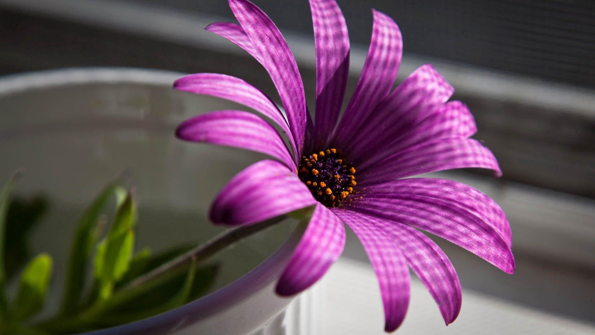 116136 скачать обои Цветы, Цветок, Лепестки, Фиолетовый - заставки и картинки бесплатно