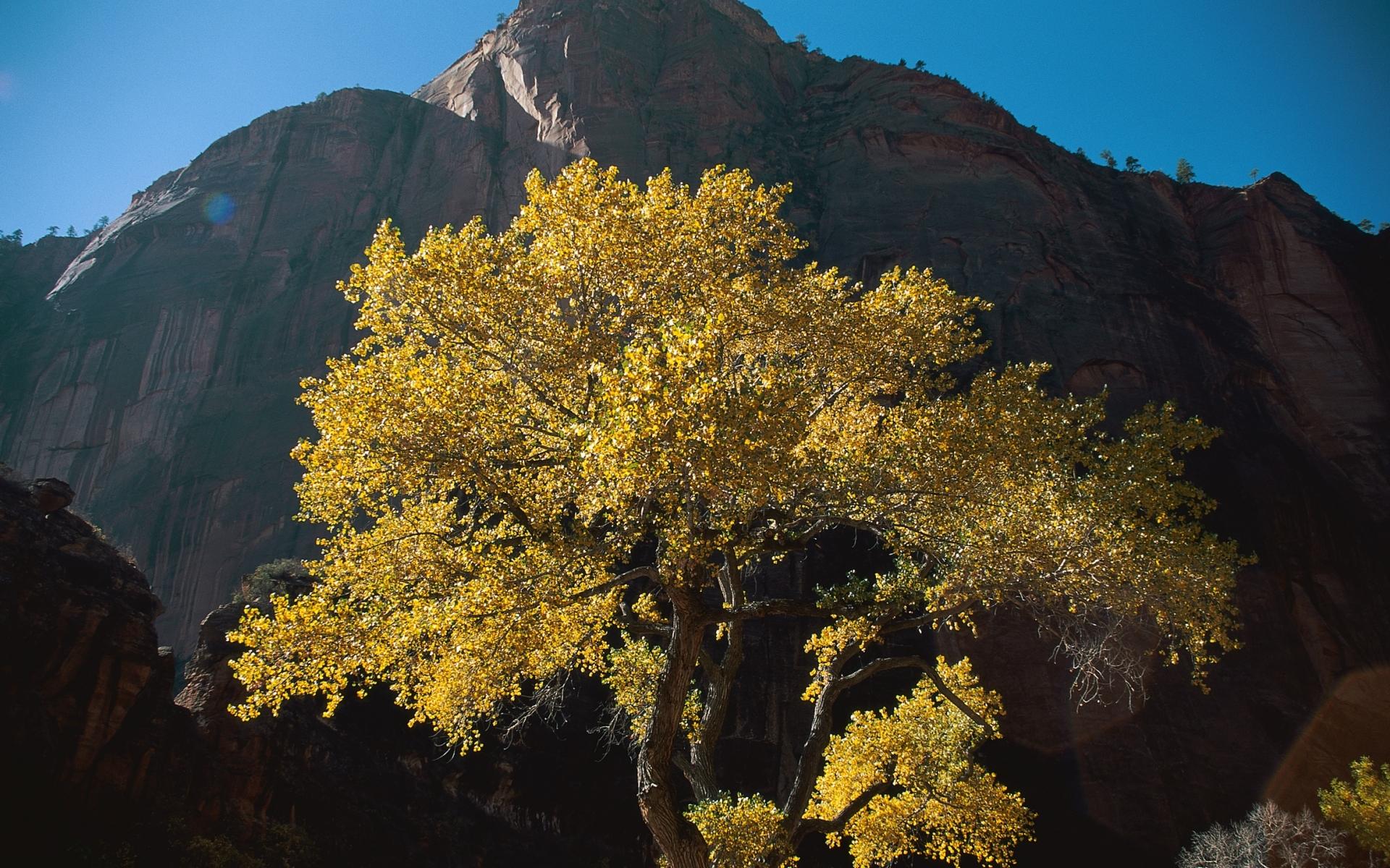 Скачать картинку Пейзаж, Деревья, Осень в телефон бесплатно.