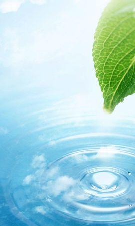 5609 скачать обои Растения, Вода, Листья, Капли - заставки и картинки бесплатно