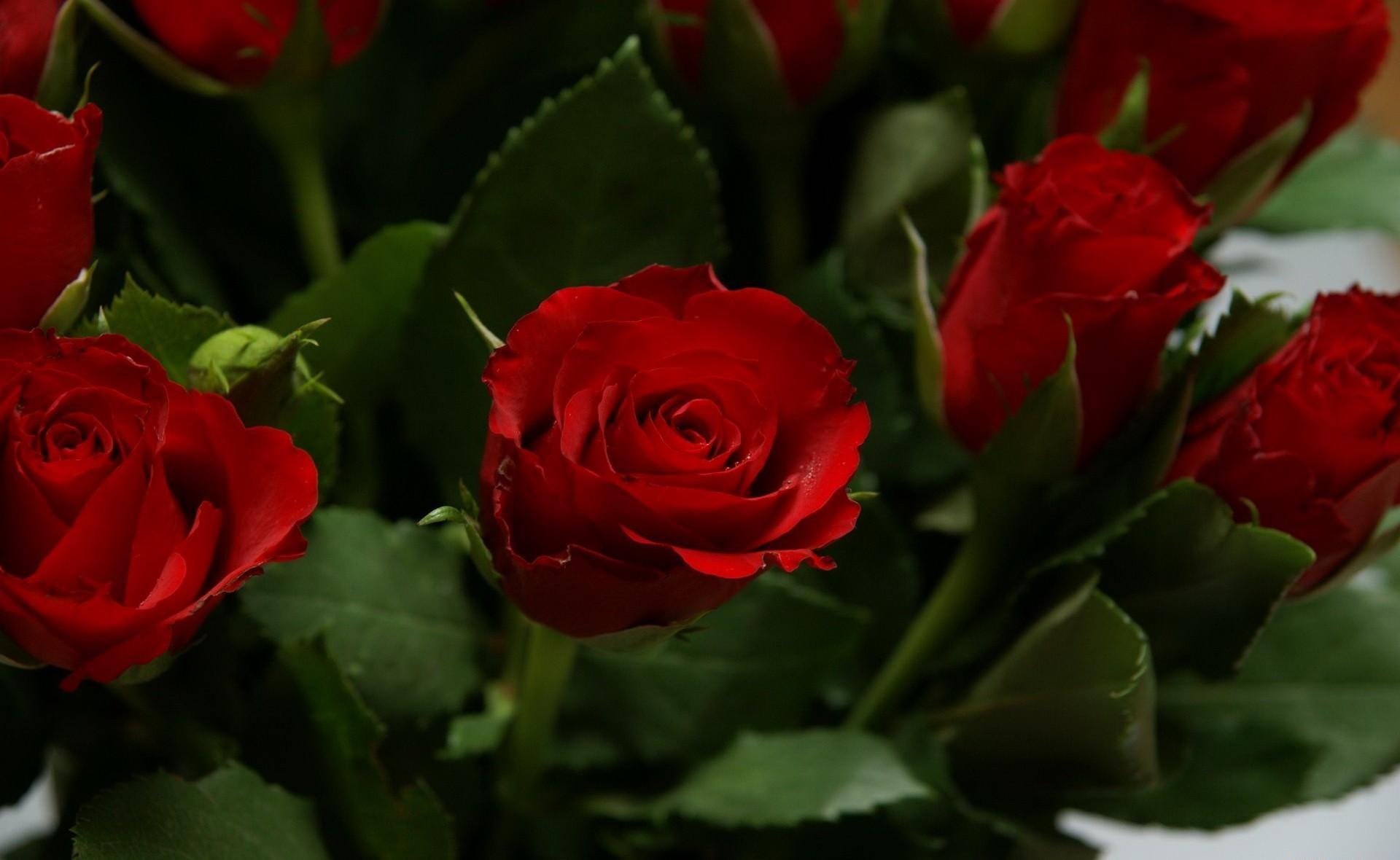 68273 скачать обои Цветы, Яркие, Букет, Розы - заставки и картинки бесплатно