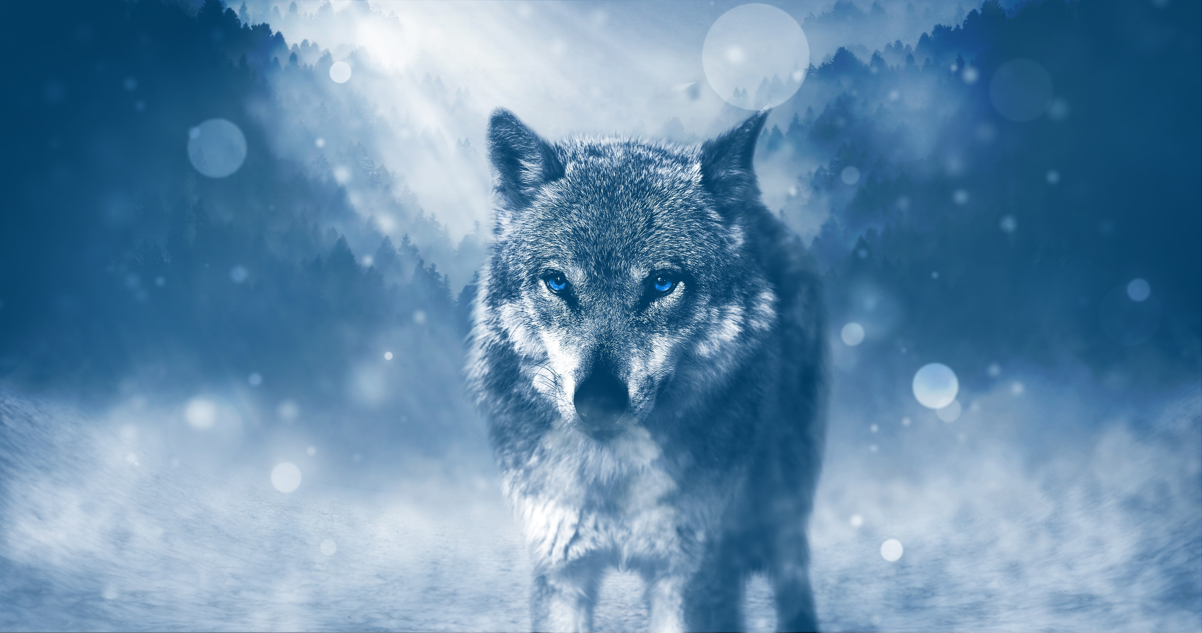 154124 Screensavers and Wallpapers Photoshop for phone. Download Animals, Glare, Predator, Wolf, Sight, Opinion, Photoshop pictures for free