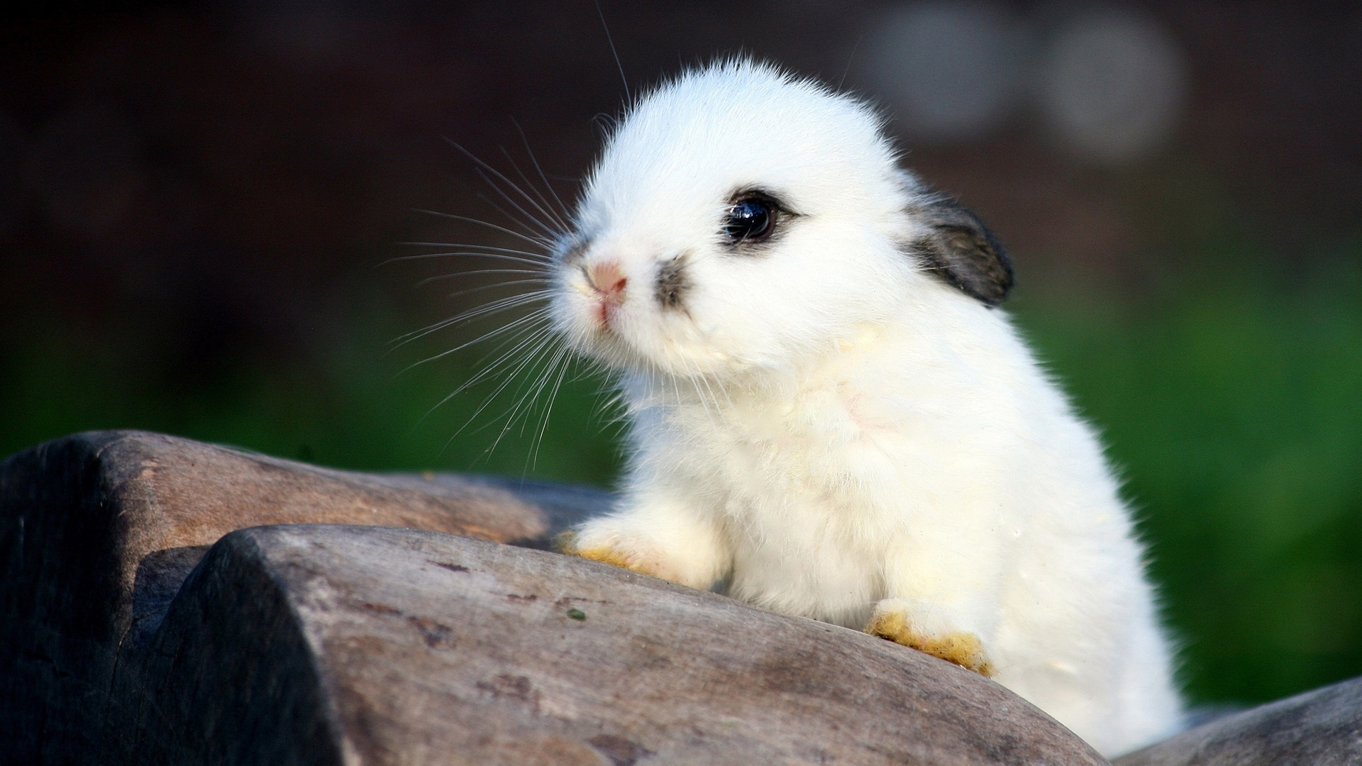 46752 Hintergrundbild herunterladen Kaninchen, Tiere - Bildschirmschoner und Bilder kostenlos
