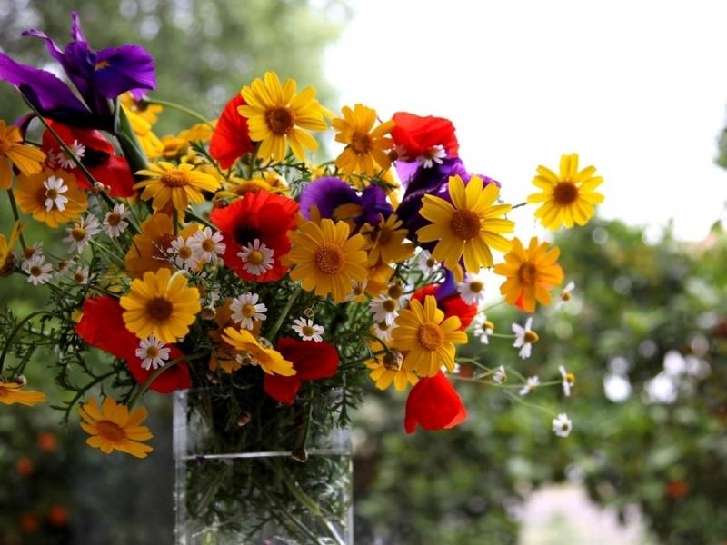 44339 Hintergrundbild herunterladen Pflanzen, Blumen - Bildschirmschoner und Bilder kostenlos