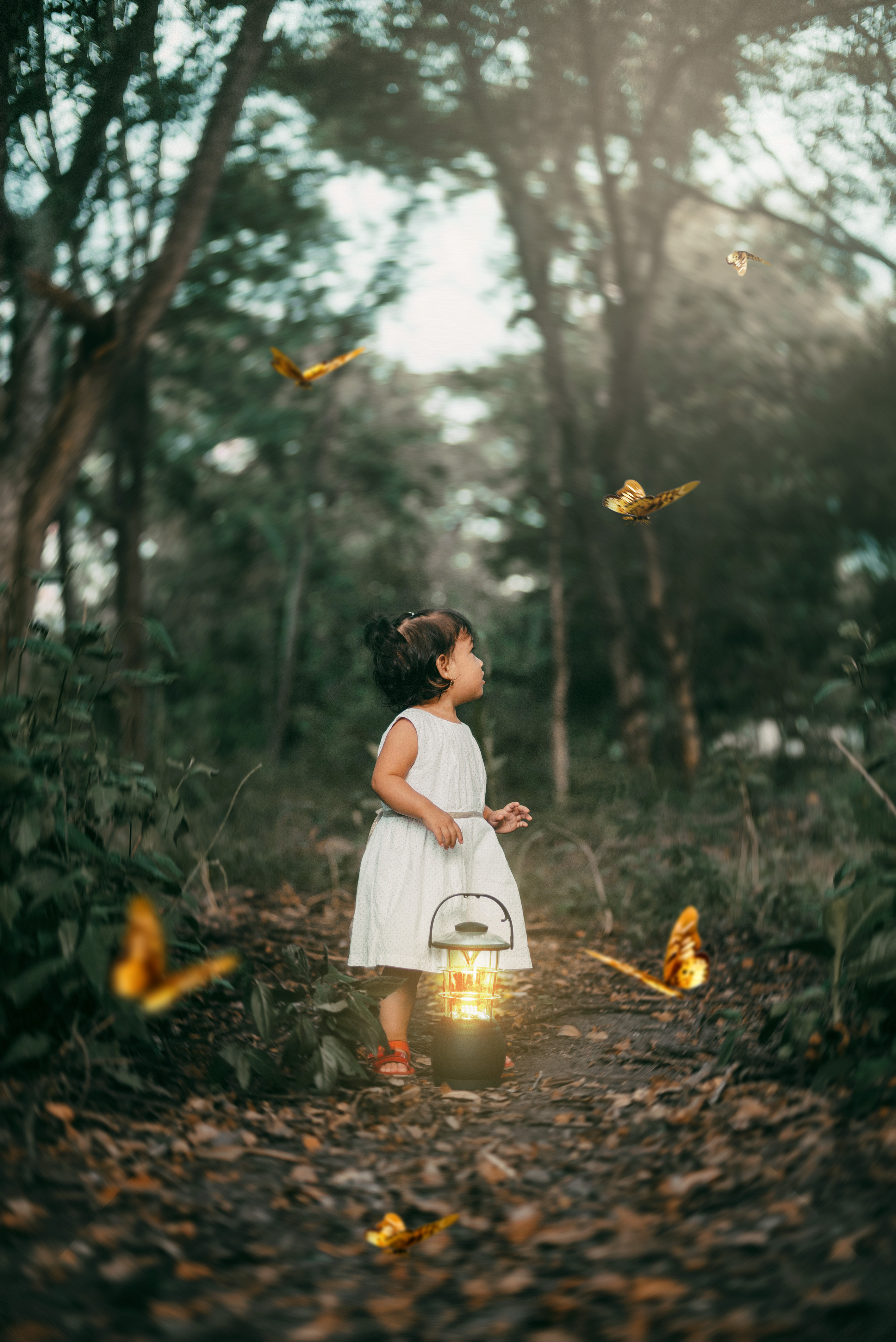 91767 download wallpaper Miscellanea, Miscellaneous, Child, Butterflies, Lamp, Lantern, Forest, Path screensavers and pictures for free