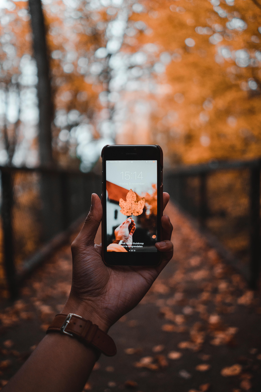 116839 Заставки и Обои Технологии на телефон. Скачать Технологии, Осень, Рука, Лист, Клен, Телефон картинки бесплатно