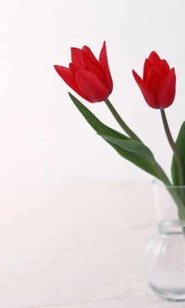 356 скачать обои Растения, Цветы, Тюльпаны - заставки и картинки бесплатно