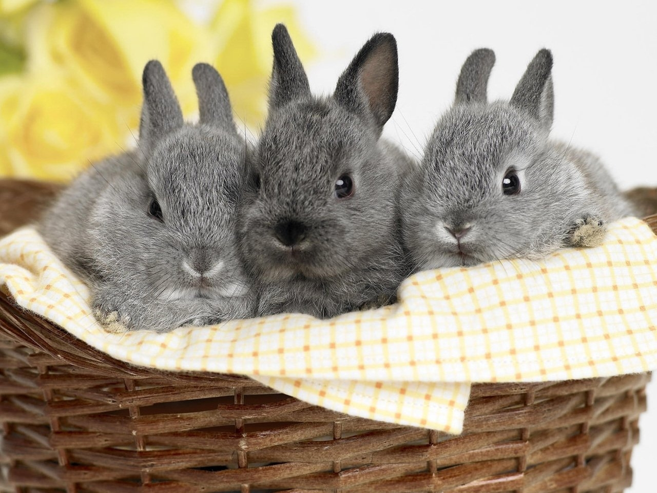 36314 download wallpaper Animals, Rabbits screensavers and pictures for free