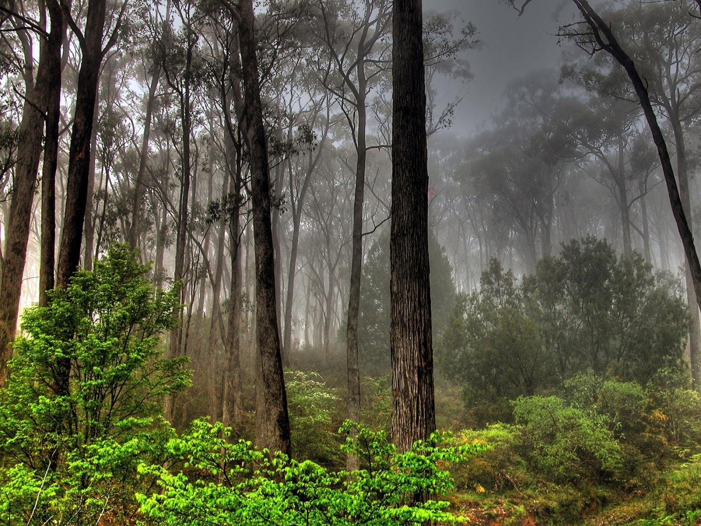 41566 скачать обои Пейзаж, Природа, Деревья - заставки и картинки бесплатно