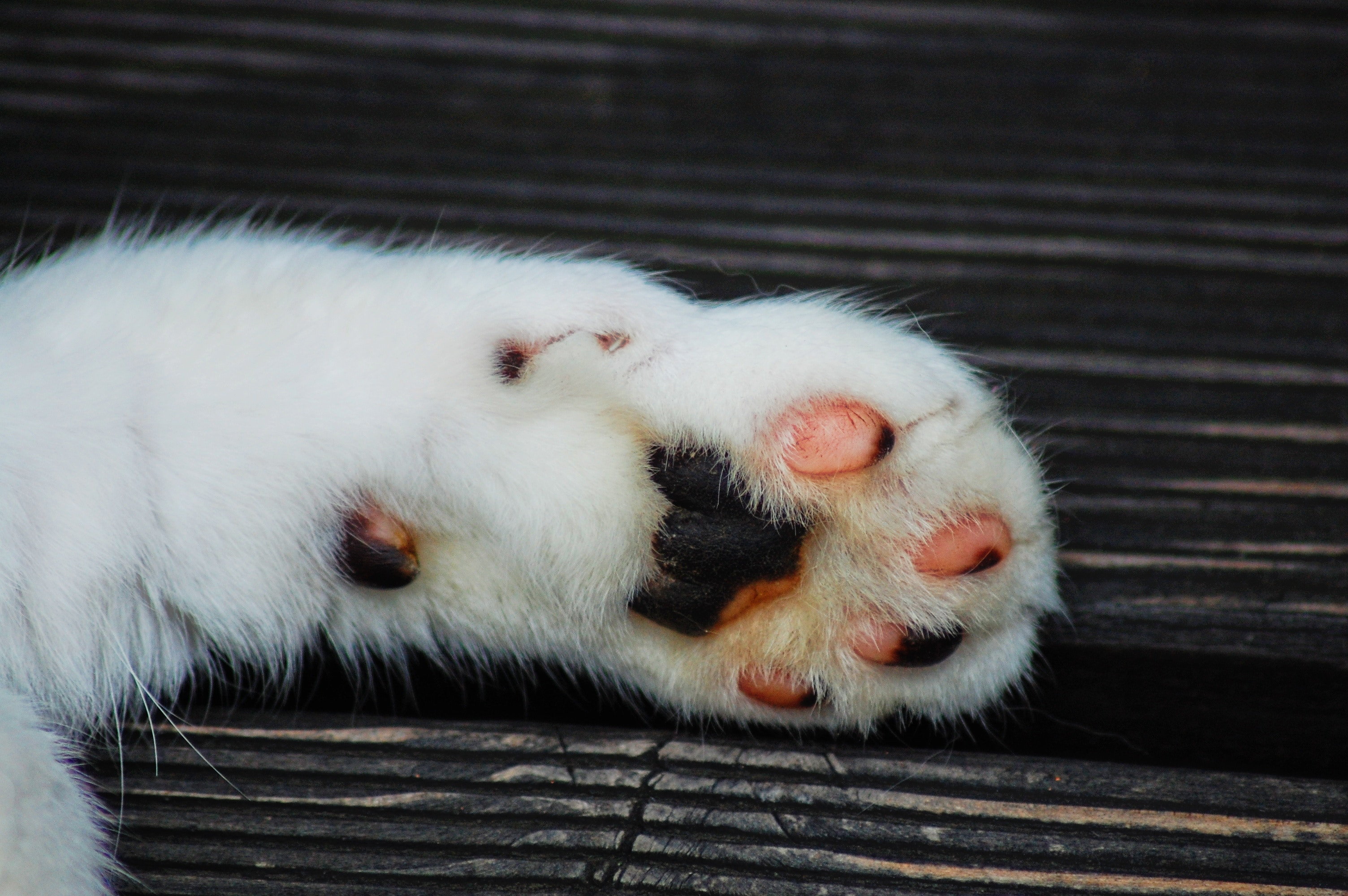 120371 download wallpaper Animals, Paw, Cat, Stains, Spots screensavers and pictures for free