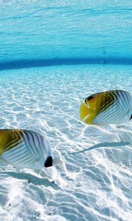 25160 скачать Бирюзовые обои на телефон бесплатно, Животные, Пейзаж, Море, Рыбы Бирюзовые картинки и заставки на мобильный