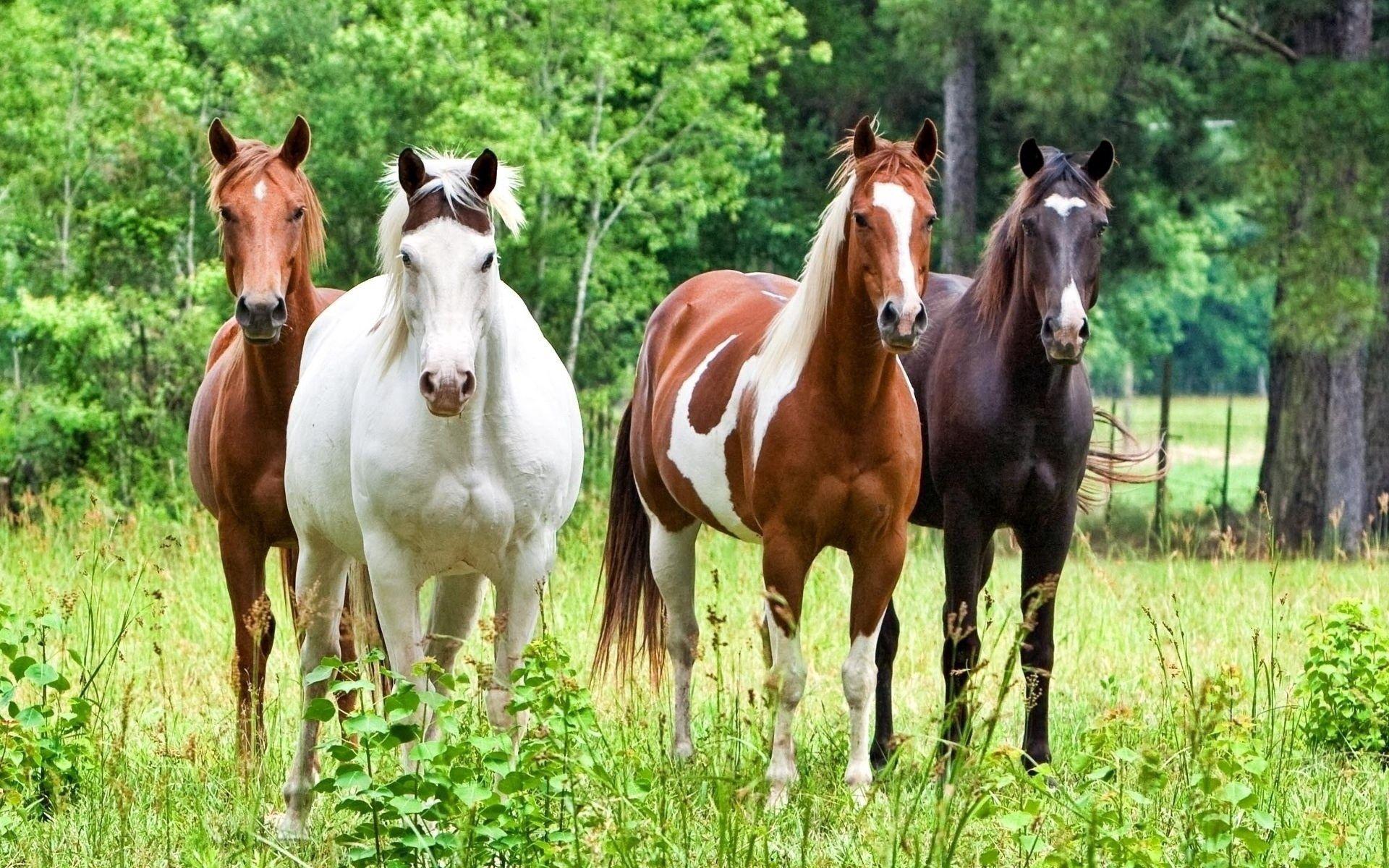 59633 скачать обои Лошади, Животные, Трава, Окрас, Кони, Табун - заставки и картинки бесплатно