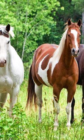 59633 baixar papel de parede Animais, Cavalos, Rebanho, Manada, Grama, Cor - protetores de tela e imagens gratuitamente