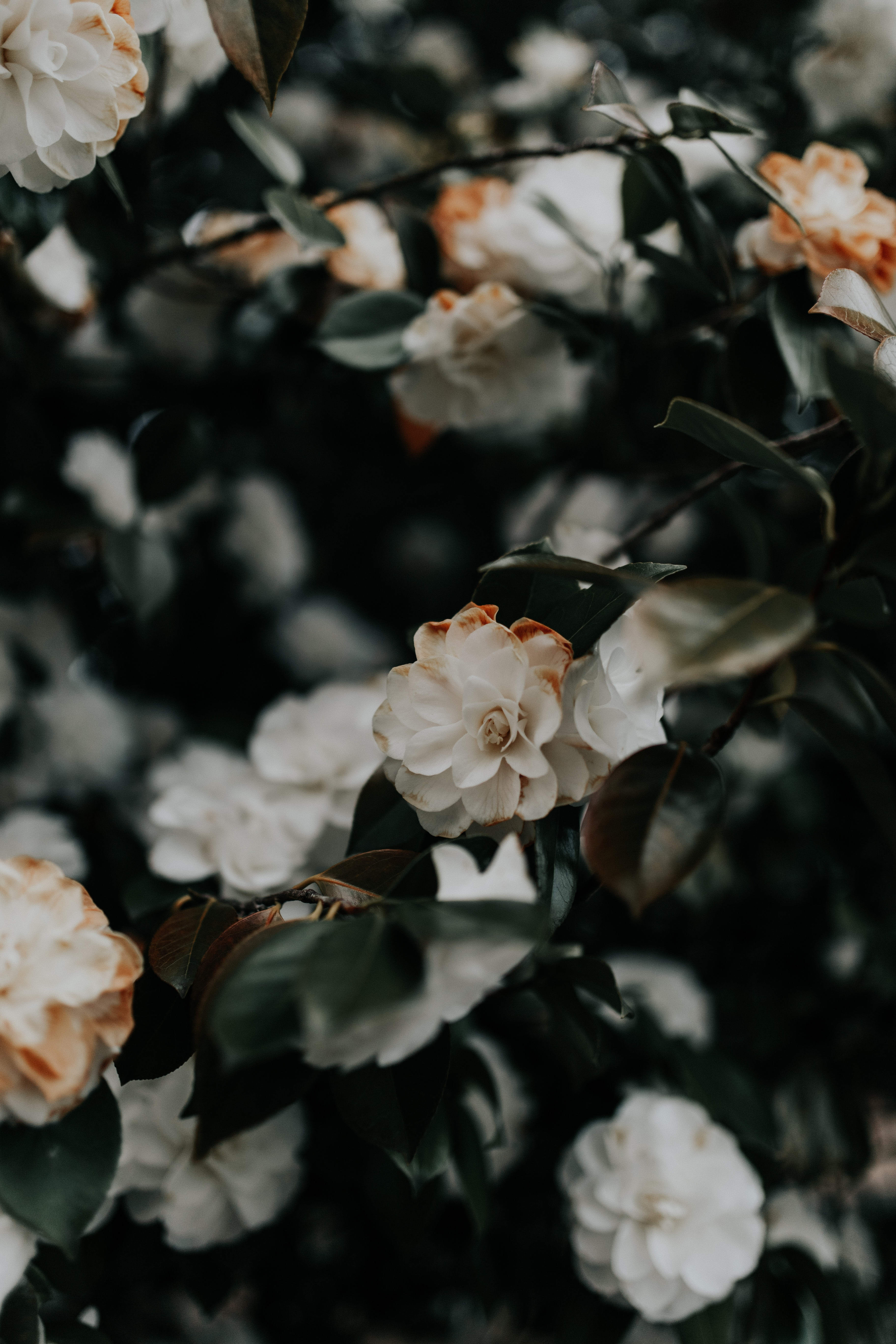 153966 fond d'écran 1080x2400 sur votre téléphone gratuitement, téléchargez des images Fleurs, Feuilles, Plante, Planter, Branches, Buisson 1080x2400 sur votre mobile