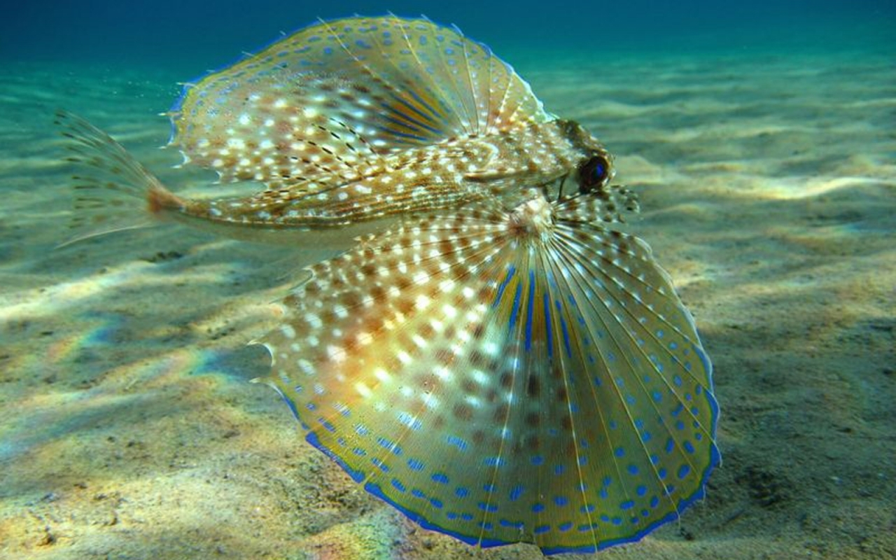9529 download wallpaper Animals, Sea, Fishes screensavers and pictures for free