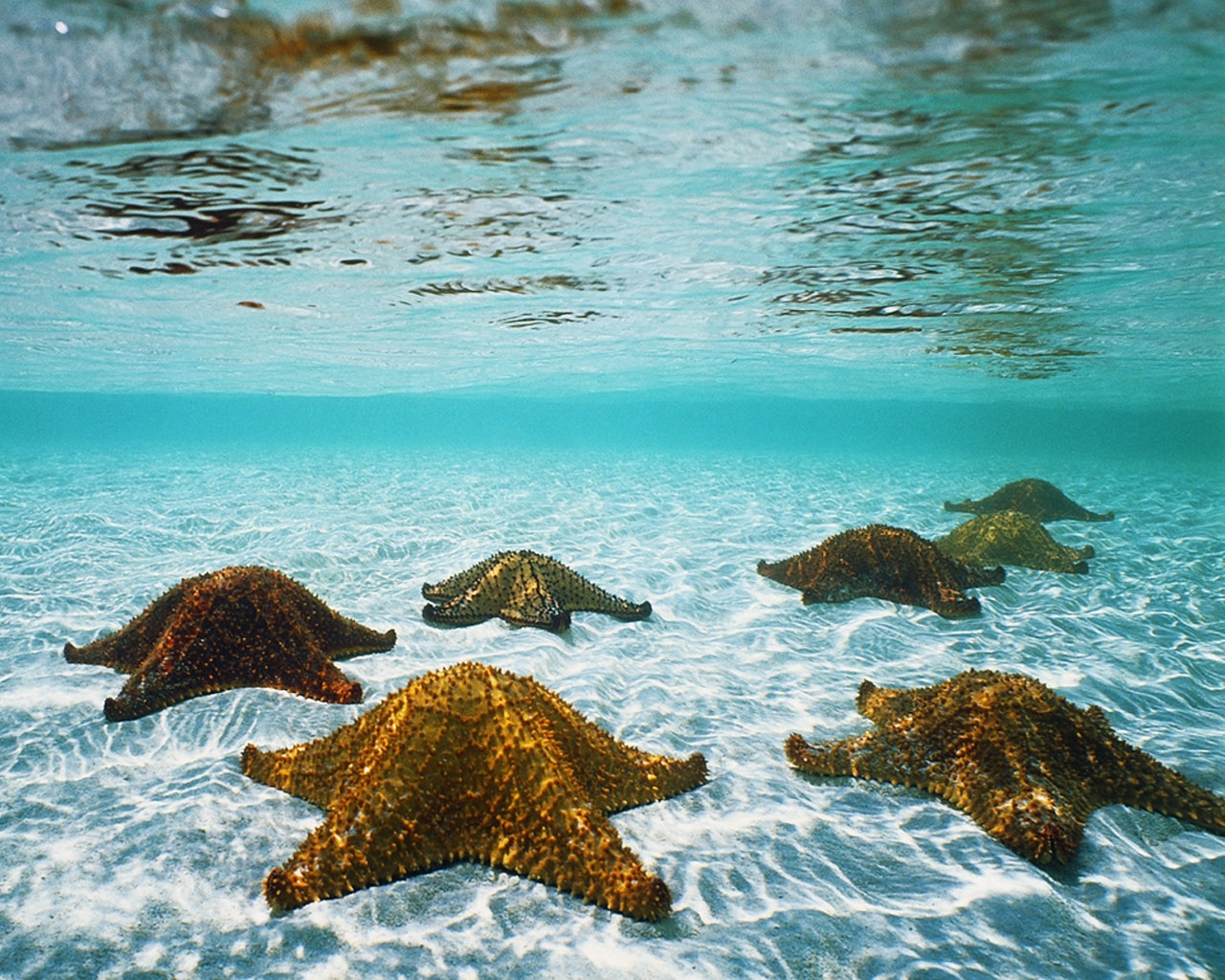9131 download wallpaper Landscape, Water, Sea, Starfish screensavers and pictures for free