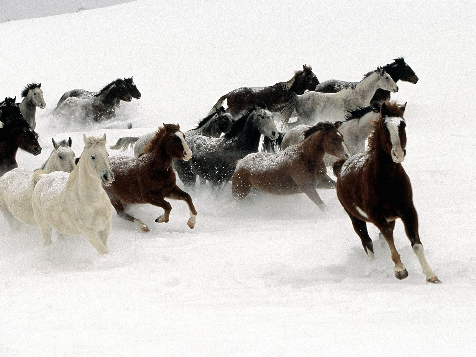 140554 download wallpaper Animals, Horses, Herd, Run Away, Run, Snow screensavers and pictures for free