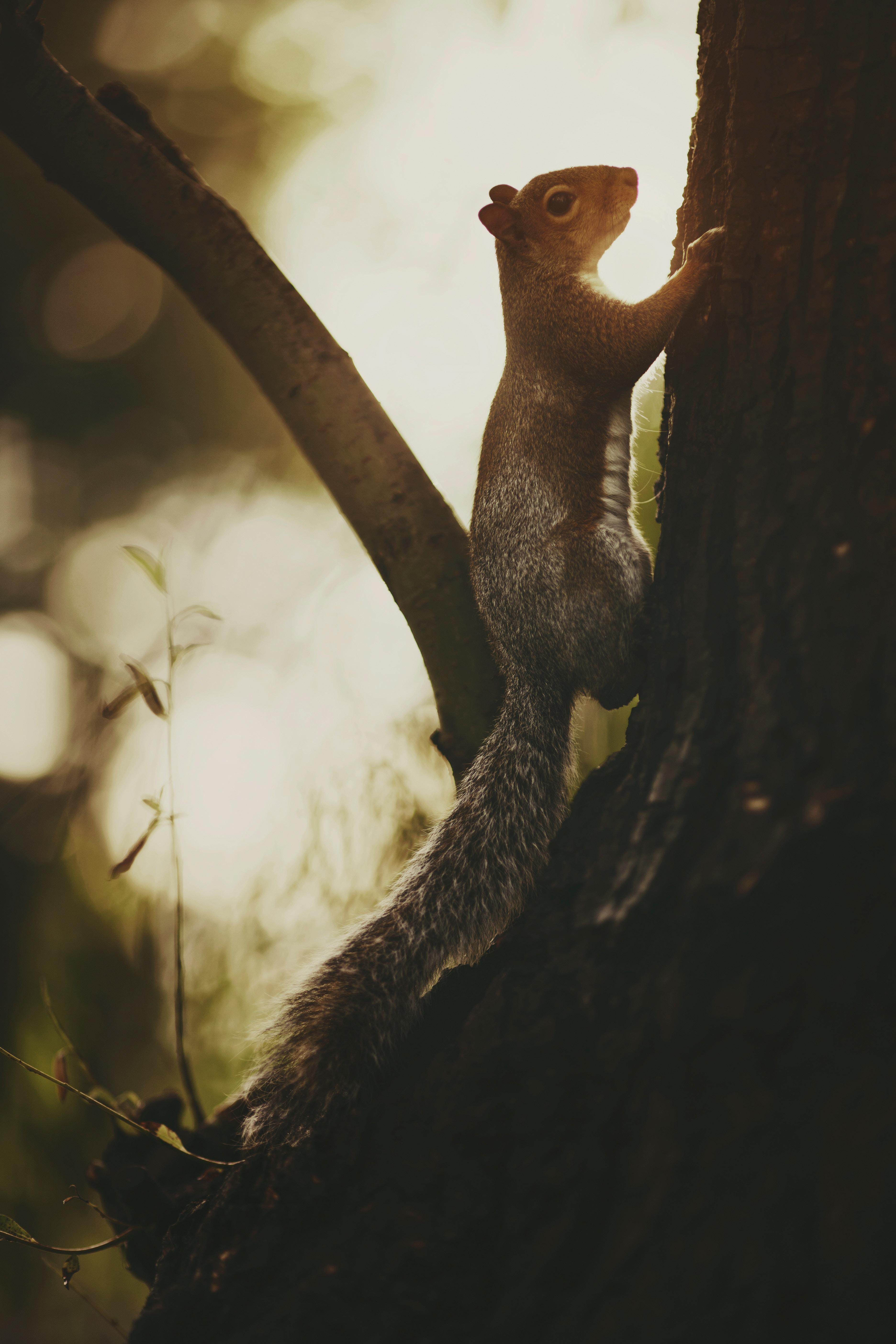 120779 скачать обои Животные, Белка, Дерево, Кора, Дикая Природа - заставки и картинки бесплатно