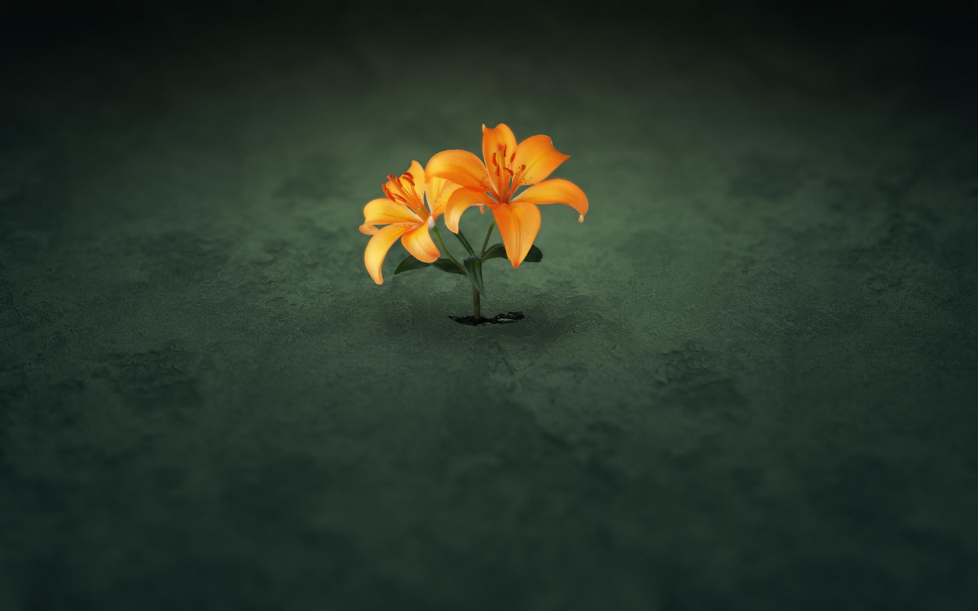 10107 descargar fondo de pantalla Plantas, Flores: protectores de pantalla e imágenes gratis