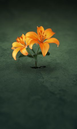 10107 скачать обои Растения, Цветы - заставки и картинки бесплатно
