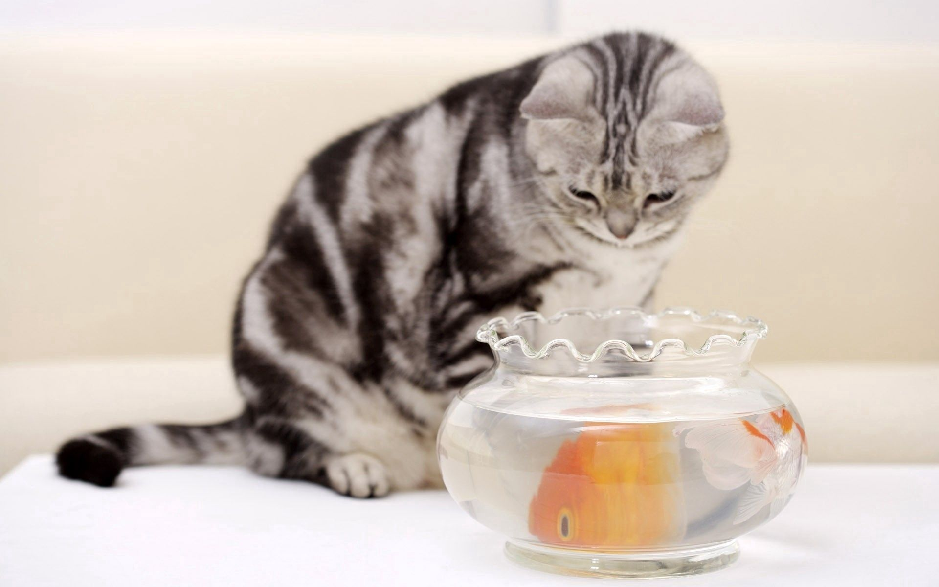 138470 Screensavers and Wallpapers Aquarium for phone. Download Animals, Cat, Aquarium, Fish, Hungry pictures for free