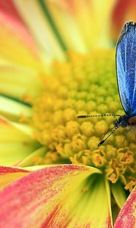 33072 Salvapantallas y fondos de pantalla Insectos en tu teléfono. Descarga imágenes de Mariposas, Insectos gratis