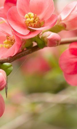41063 descargar fondo de pantalla Plantas, Flores: protectores de pantalla e imágenes gratis