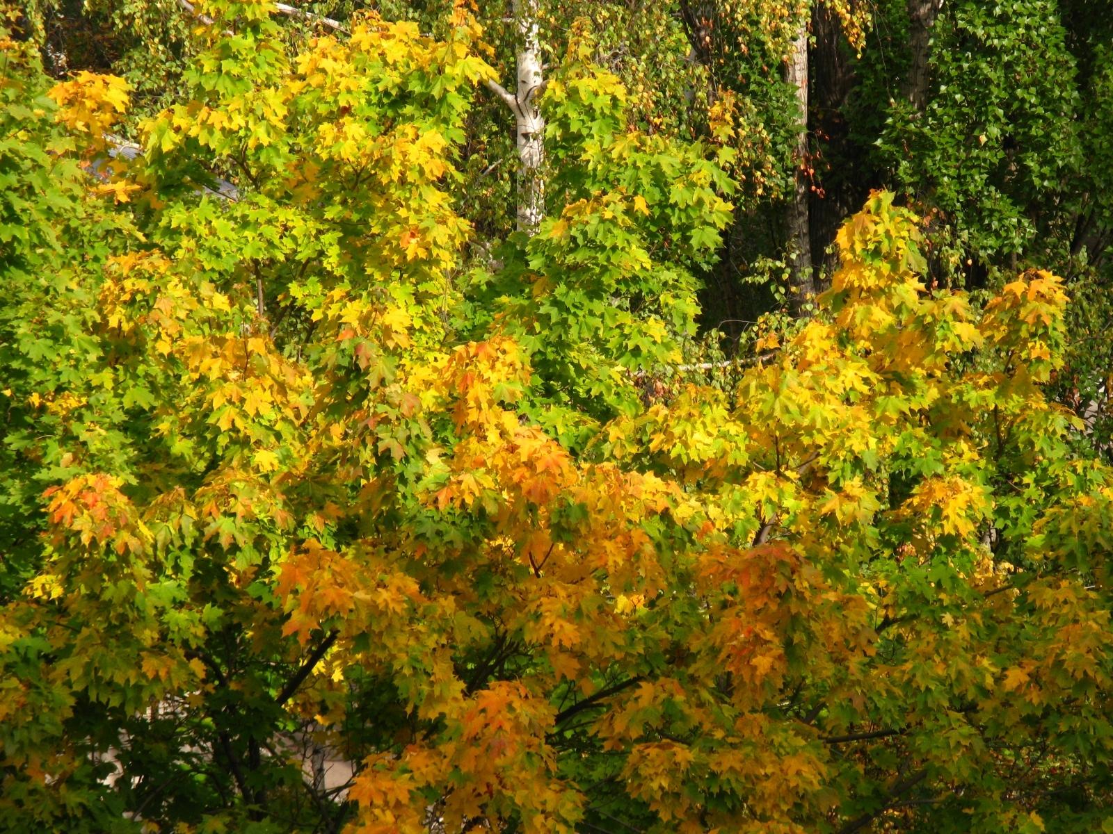 5154 скачать обои Растения, Деревья, Листья - заставки и картинки бесплатно