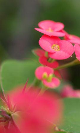 14713 скачать обои Растения, Цветы - заставки и картинки бесплатно