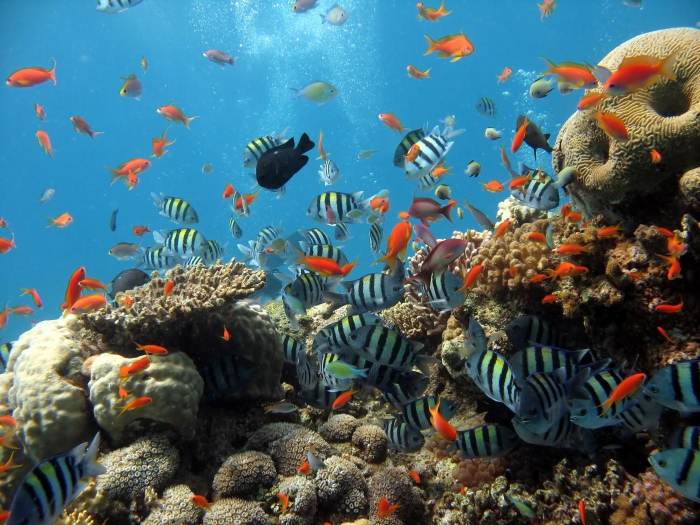 24270 скачать обои Животные, Море, Рыбы - заставки и картинки бесплатно