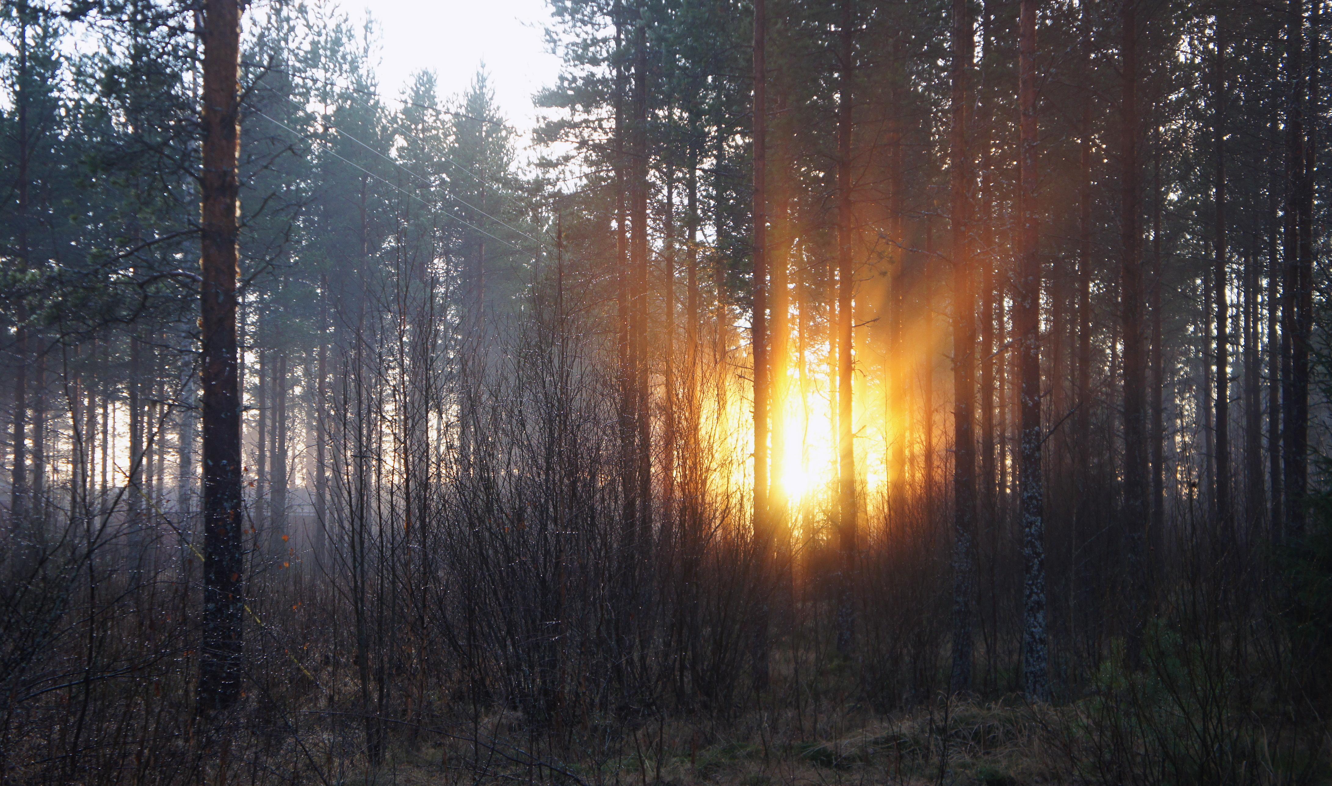 60838 économiseurs d'écran et fonds d'écran Forêt sur votre téléphone. Téléchargez Forêt, Nature, Arbres, Automne, Aube images gratuitement