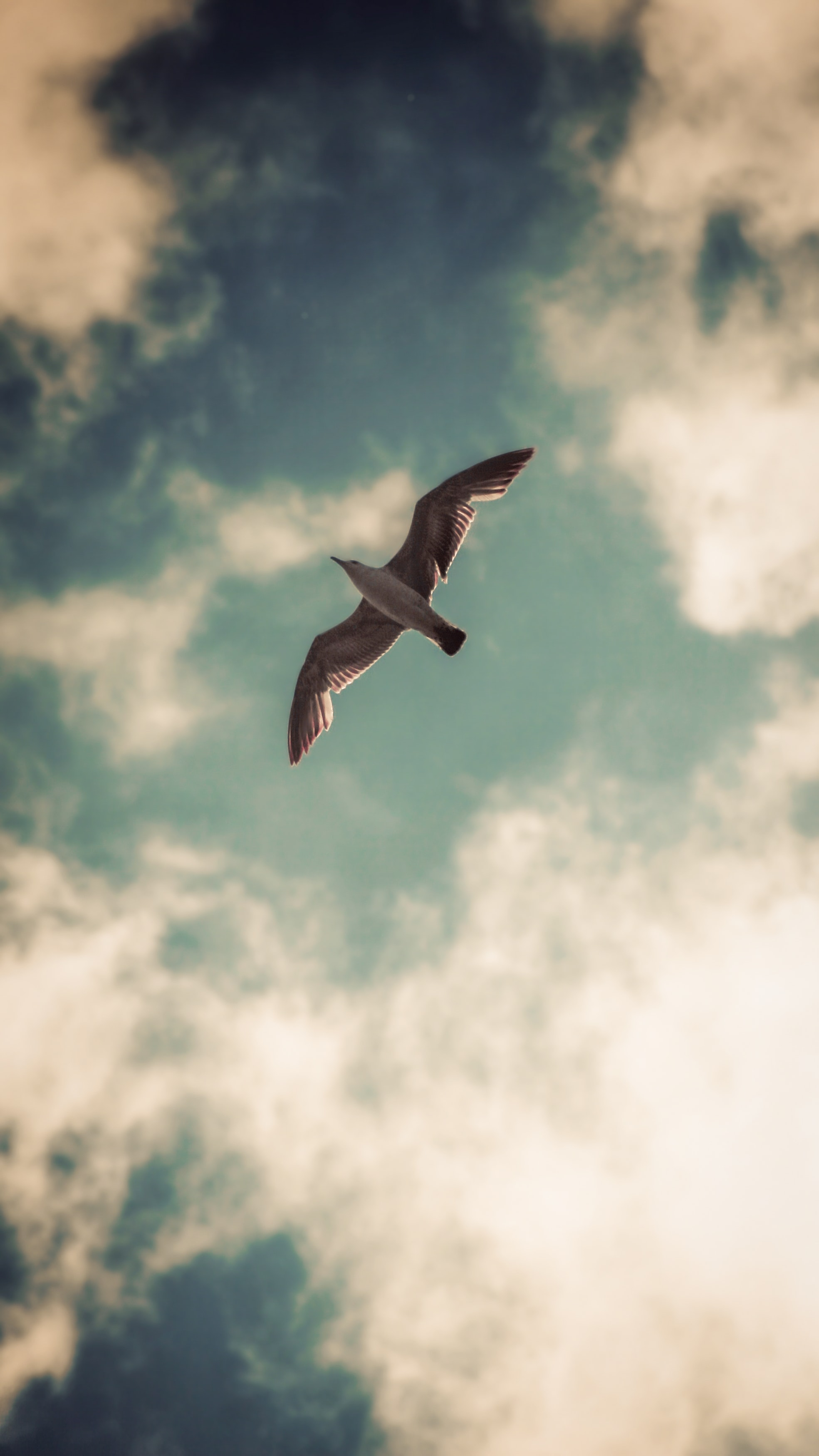 126374 download wallpaper Animals, Gull, Seagull, Bird, Wings, Sky, Clouds screensavers and pictures for free
