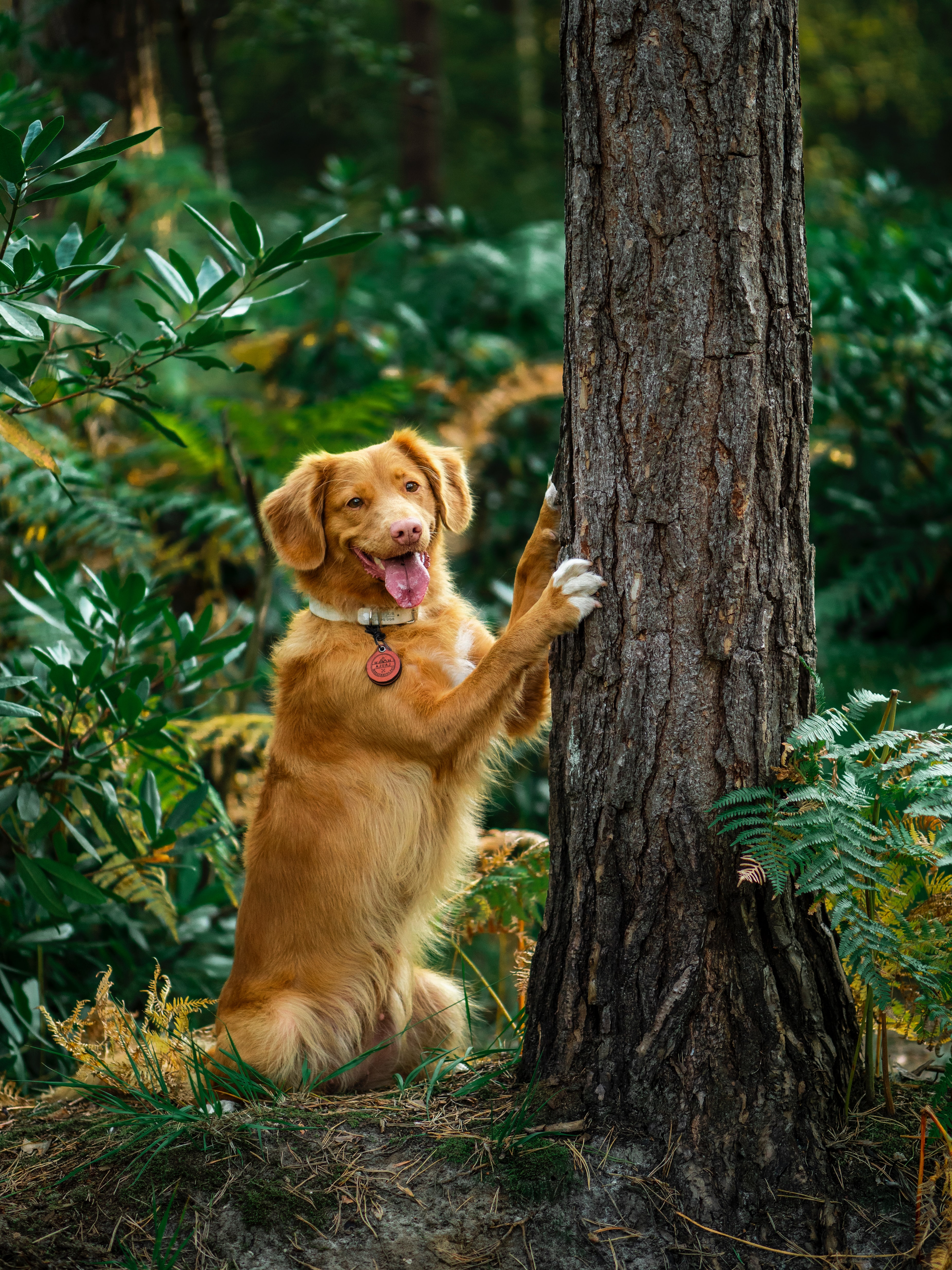 86400 download wallpaper Animals, Retriever, Dog, Protruding Tongue, Tongue Stuck Out, Funny, Wood, Tree screensavers and pictures for free