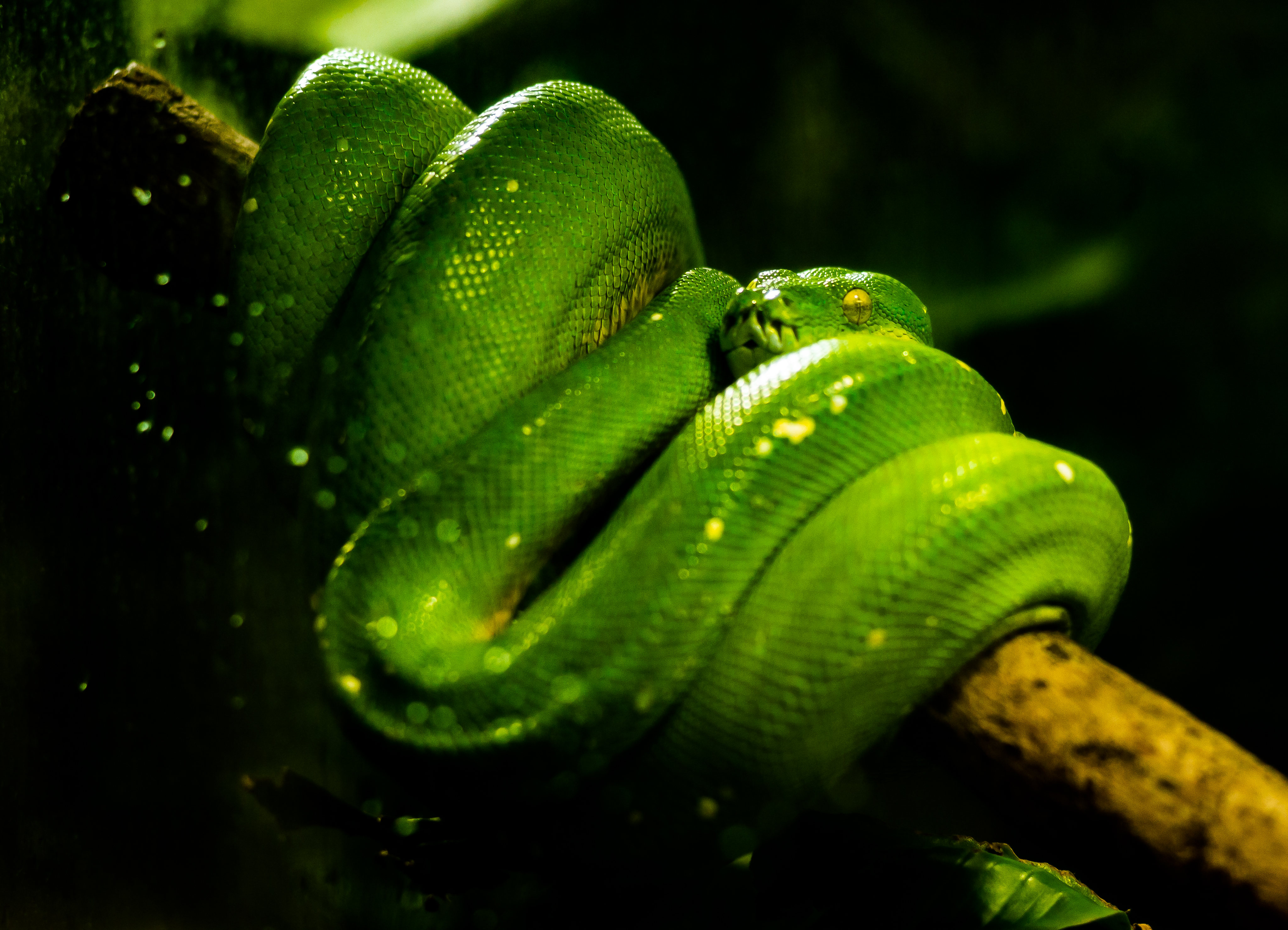 124508 Screensavers and Wallpapers Snake for phone. Download Animals, Reptile, Snake pictures for free