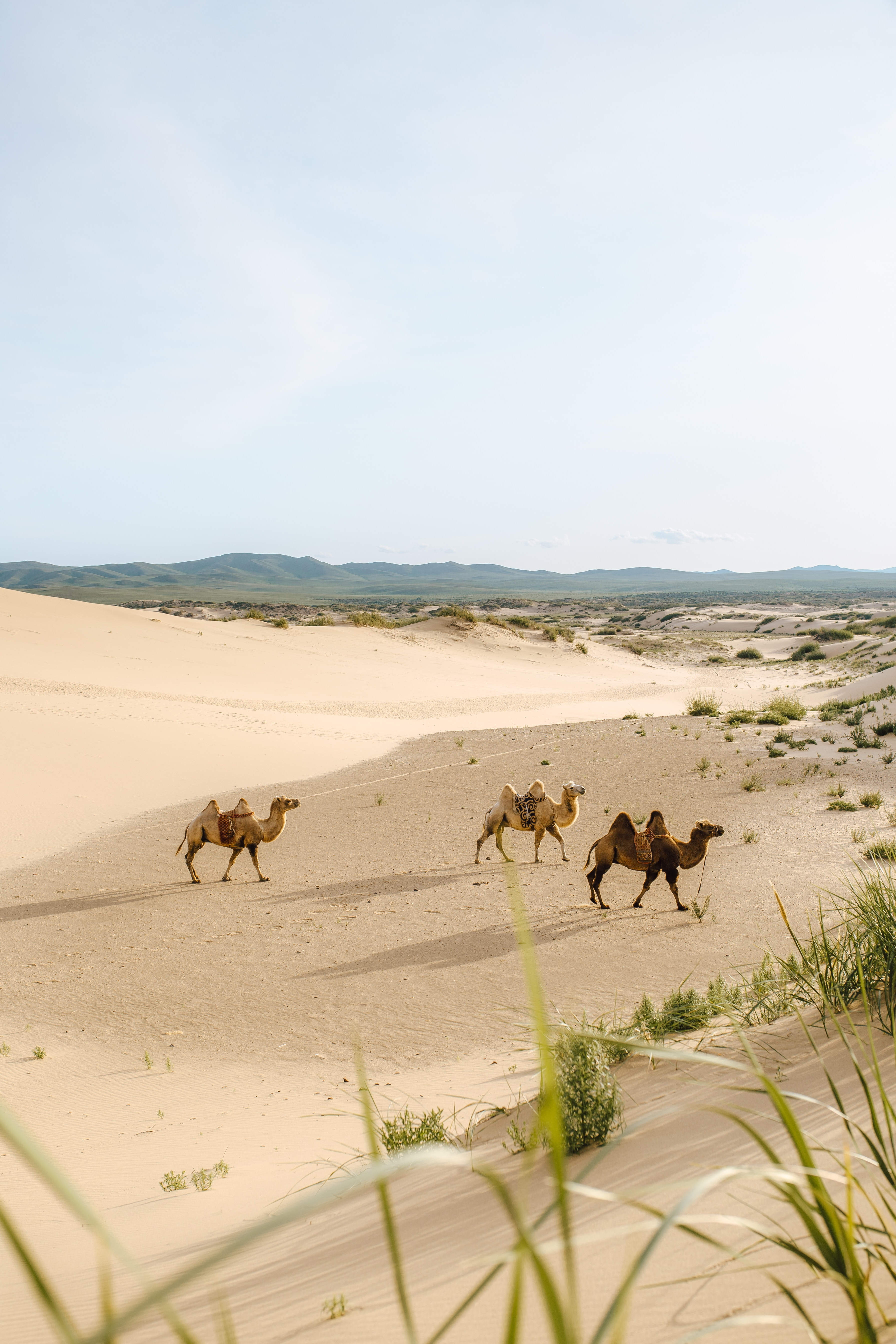 73671 Заставки и Обои Песок на телефон. Скачать Песок, Пустыня, Животные, Верблюды, Оазис картинки бесплатно
