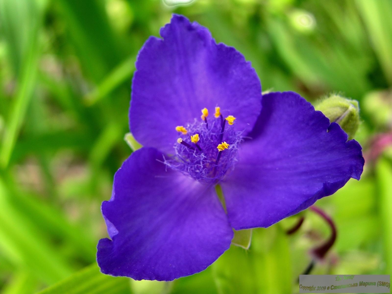 3961 скачать обои Растения, Цветы - заставки и картинки бесплатно