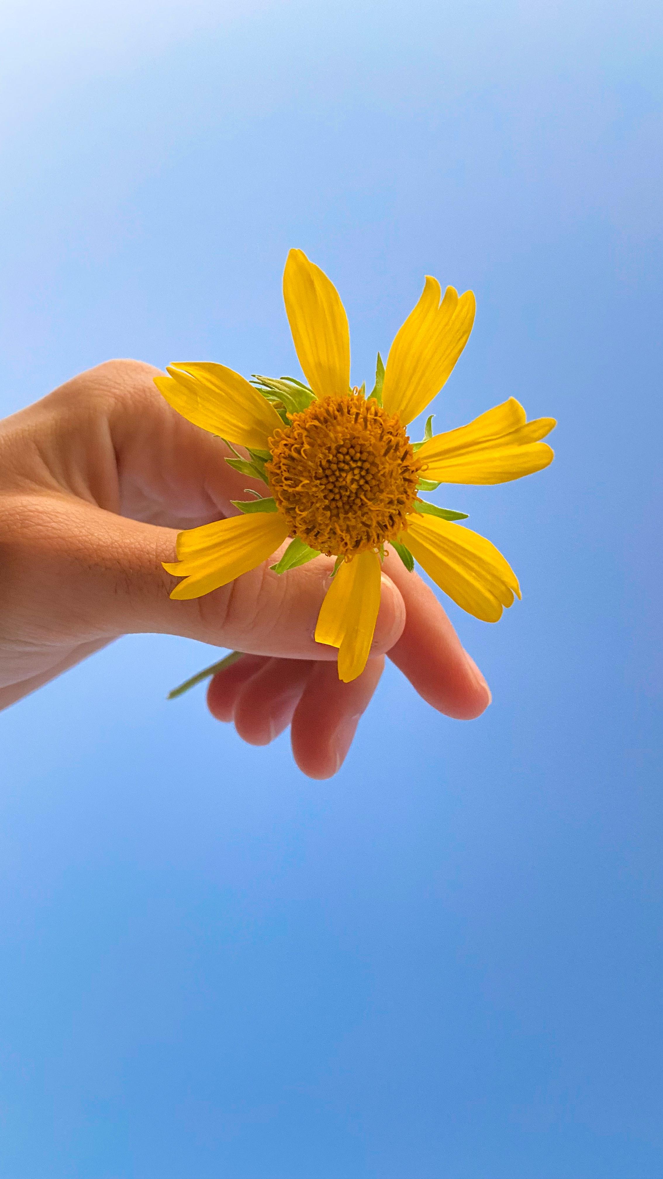 155614 скачать обои Цветы, Цветок, Лепестки, Рука, Небо - заставки и картинки бесплатно