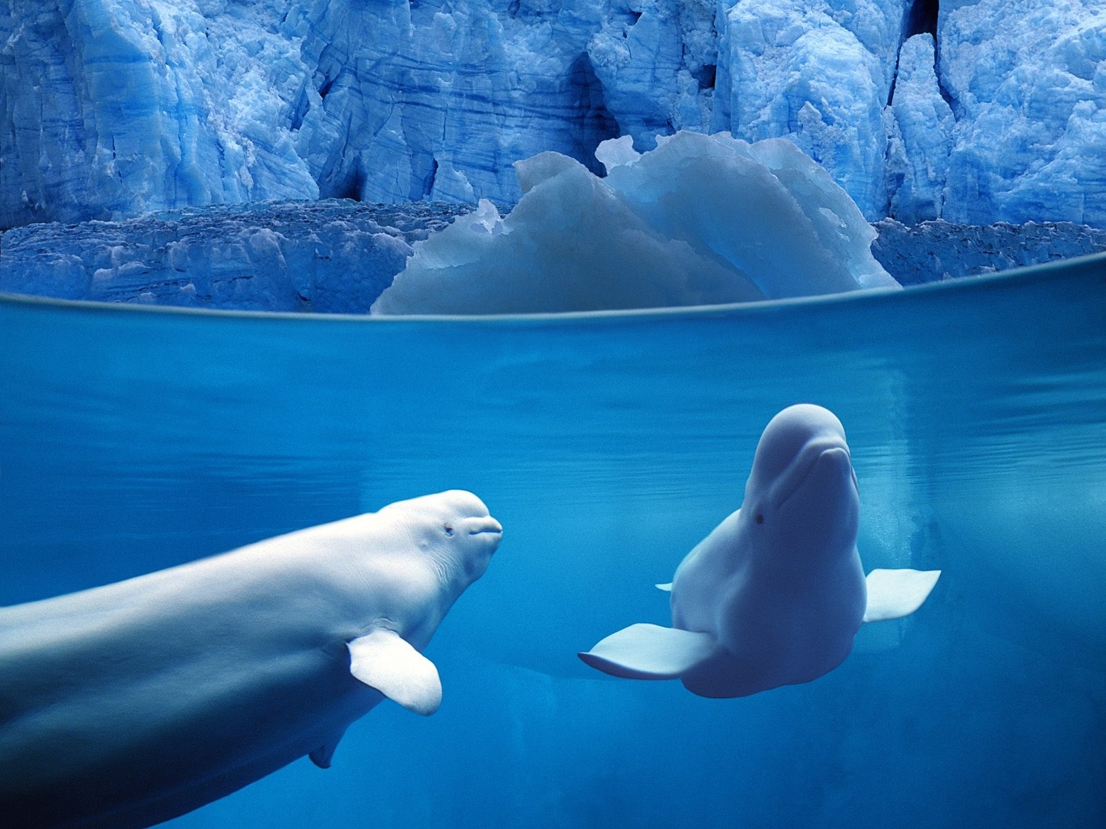 761 download wallpaper Animals, Winter, Water, Dolfins, Sea, Snow screensavers and pictures for free