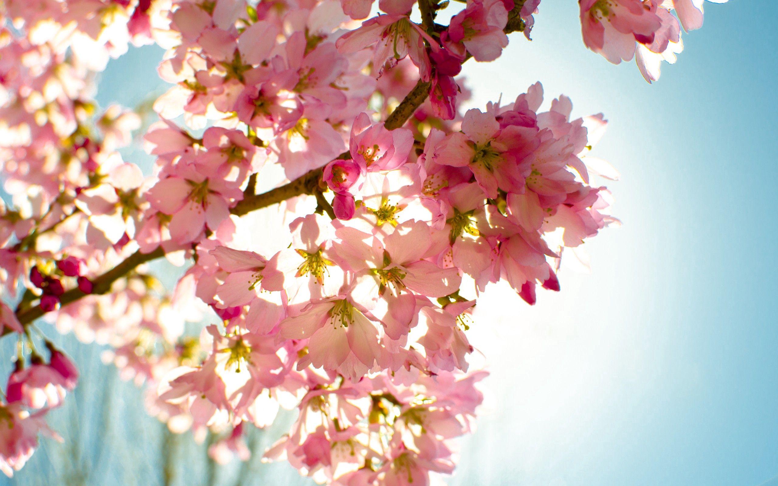 82348 скачать обои Небо, Природа, Свет, Растение, Цветение, Цветы - заставки и картинки бесплатно