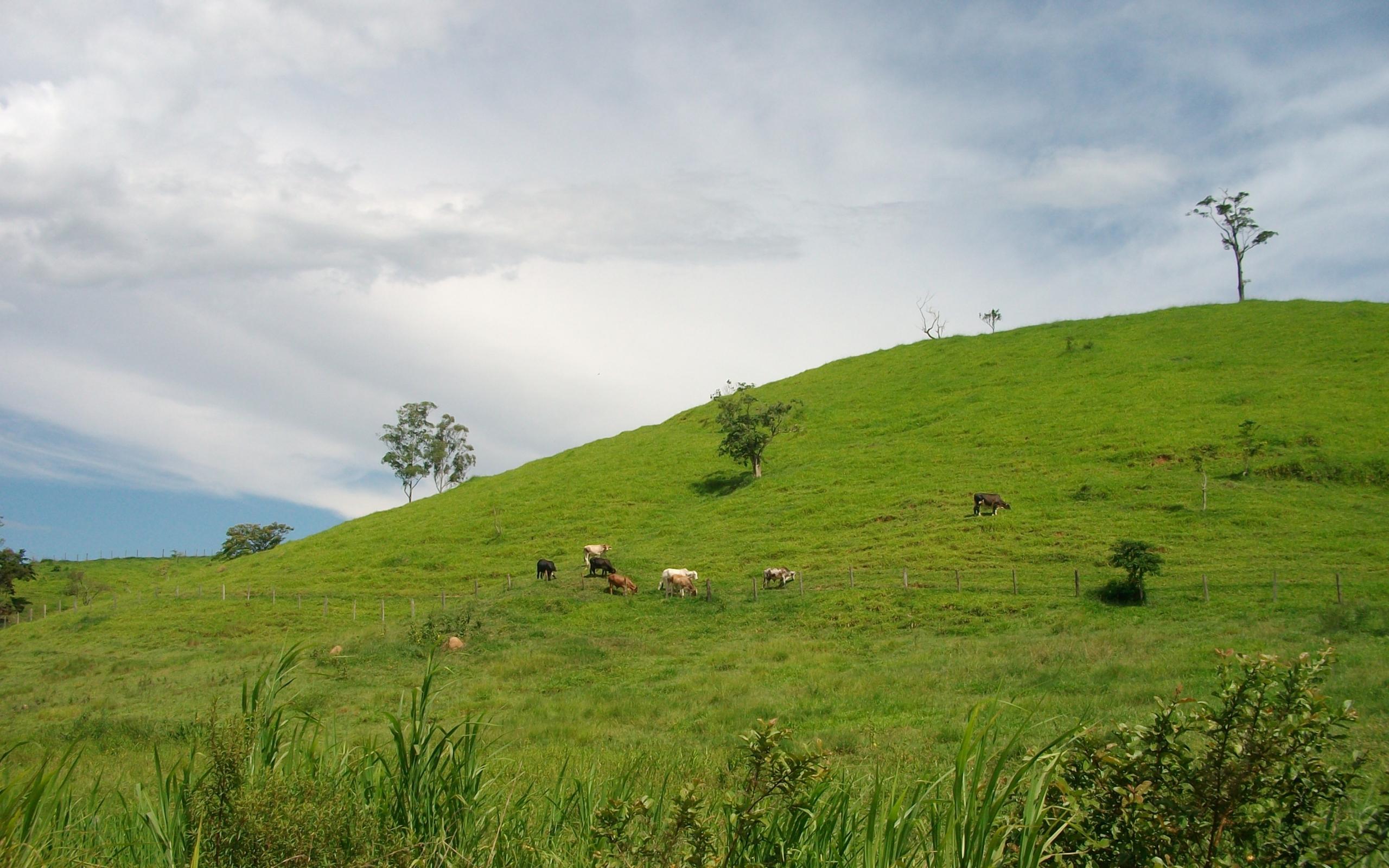 33871 скачать обои Пейзаж, Поля, Коровы - заставки и картинки бесплатно