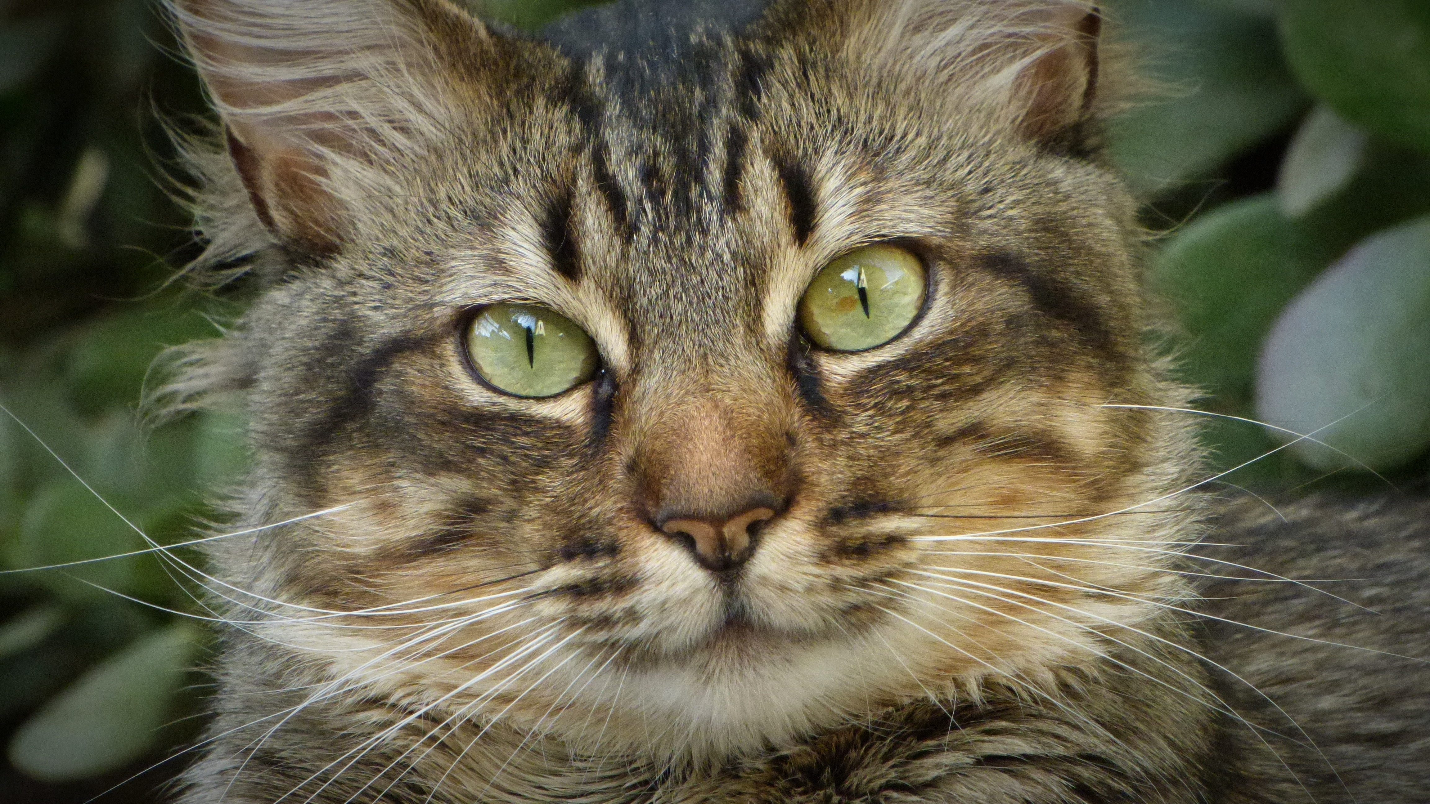 152901 download wallpaper Animals, Cat, Muzzle, Fluffy, Nice, Sweetheart, Home, Domestic screensavers and pictures for free