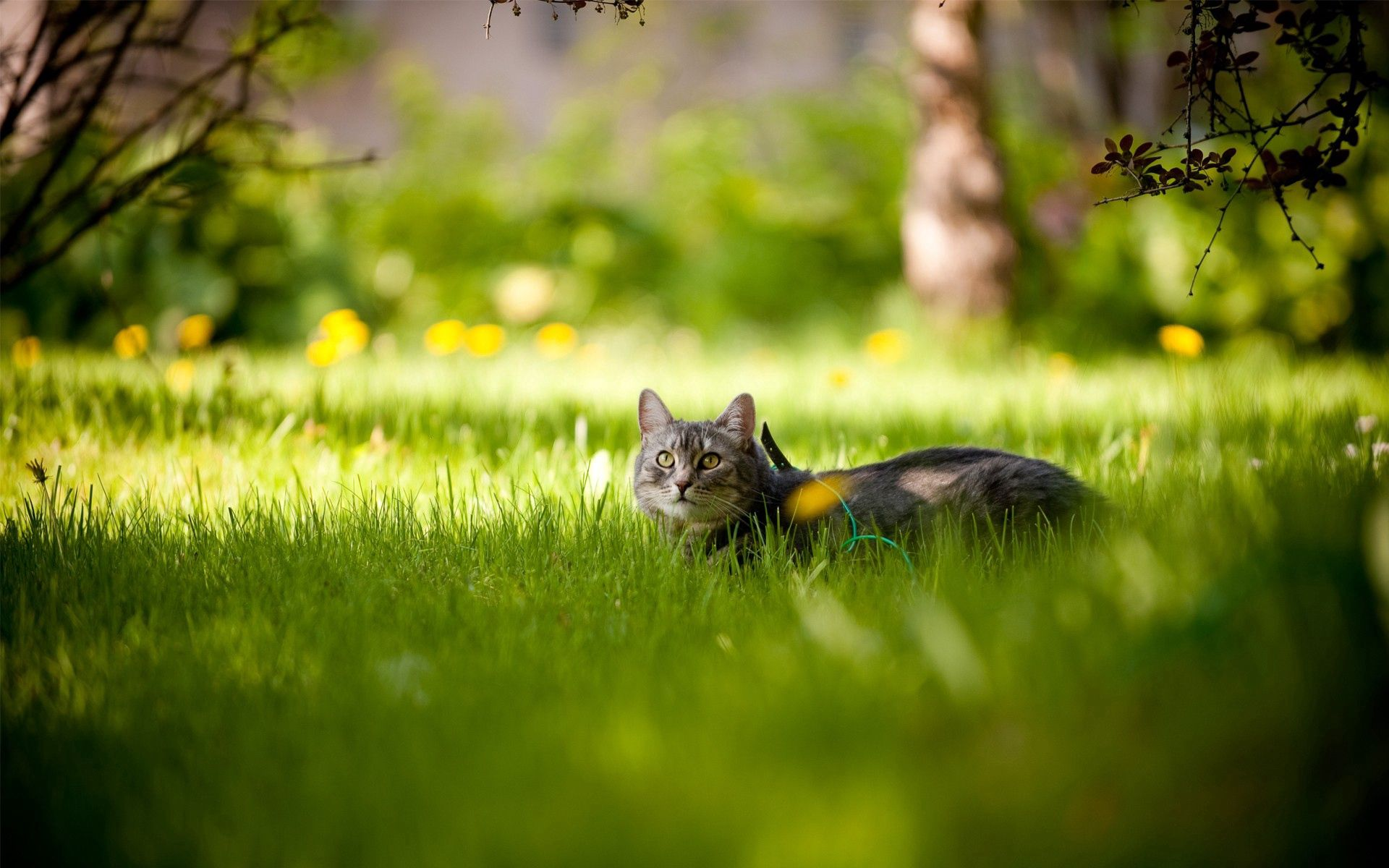 136893 download wallpaper Animals, Grass Cat, To Lie Down, Lie, Summer screensavers and pictures for free