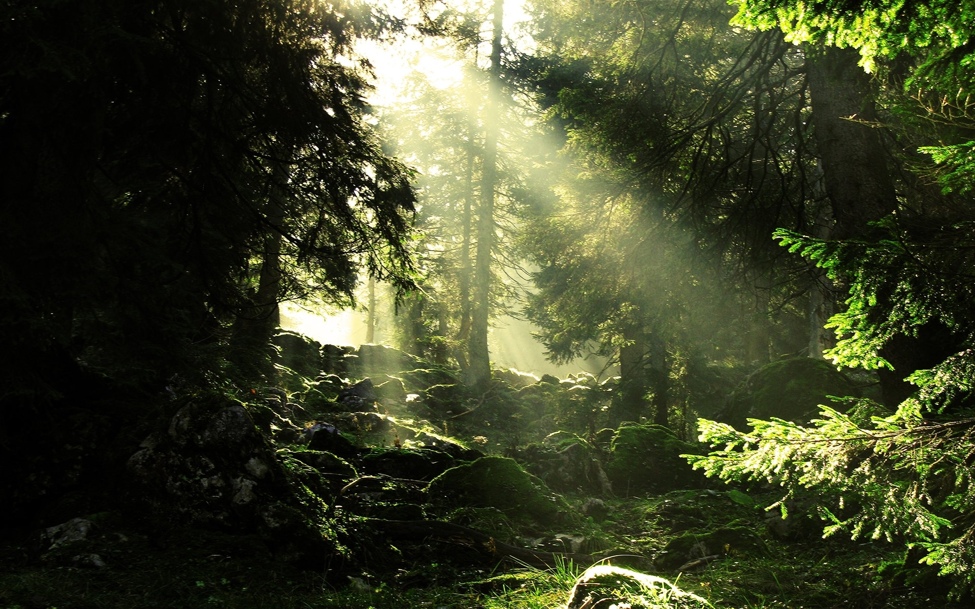 26352 download wallpaper Landscape, Trees, Sun screensavers and pictures for free
