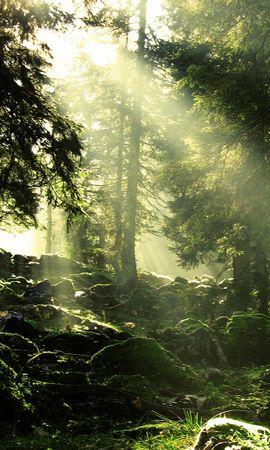 26352 скачать обои Пейзаж, Деревья, Солнце - заставки и картинки бесплатно